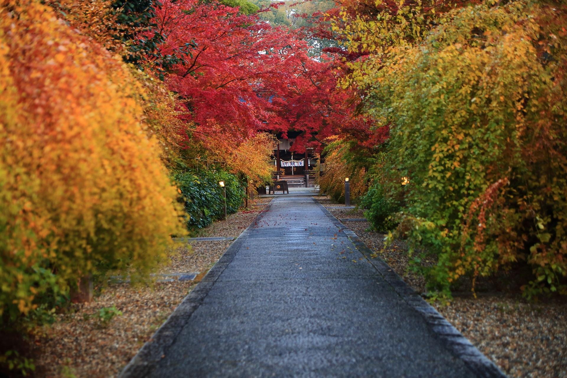 梨木神社の長い参道の紅葉