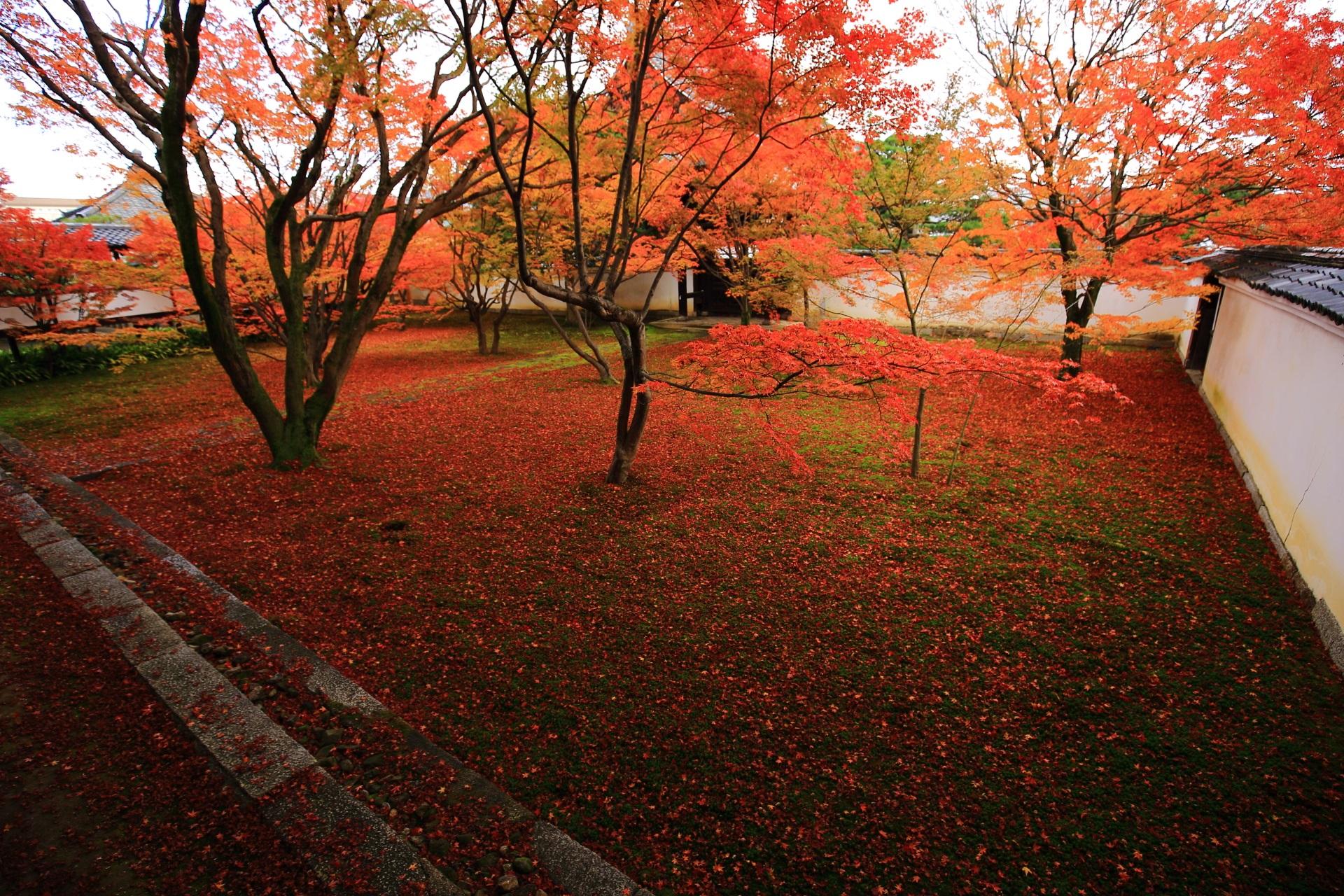 妙覚寺の「法姿園」とも呼ばれる本堂前庭園