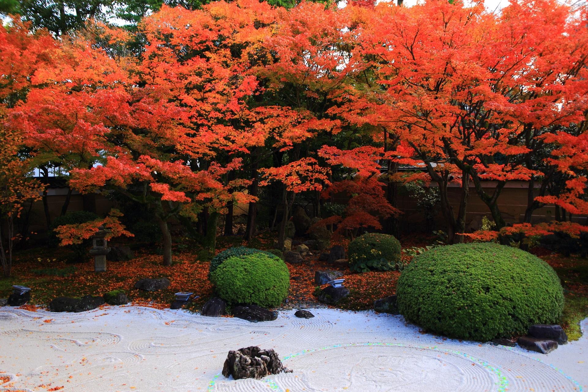 街中にあるお寺の美しく豪快な秋色の庭園