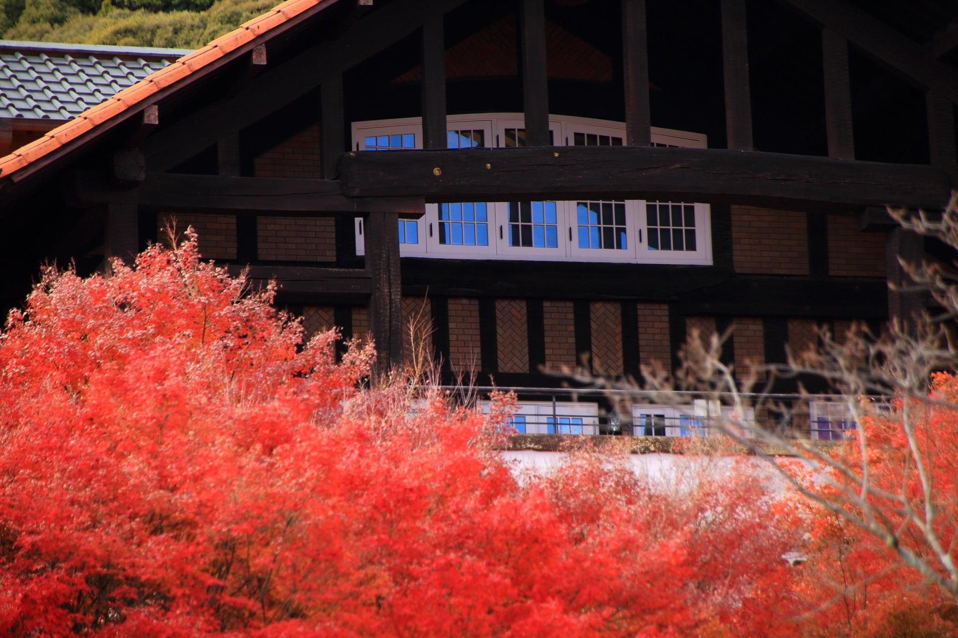 紅葉に彩られる2階のカフェテラス