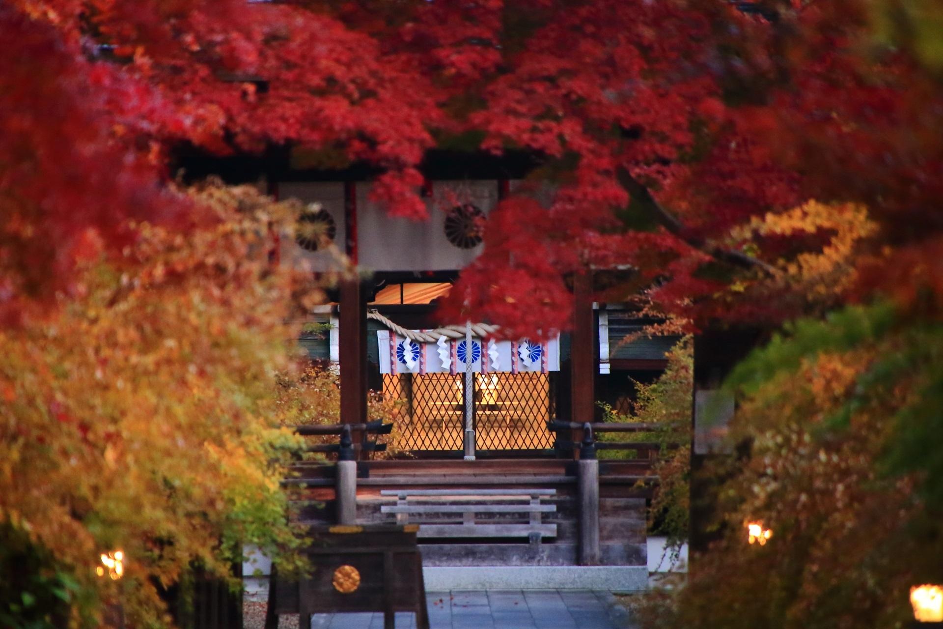 鮮やかな紅葉の奥に見える本殿の淡い光