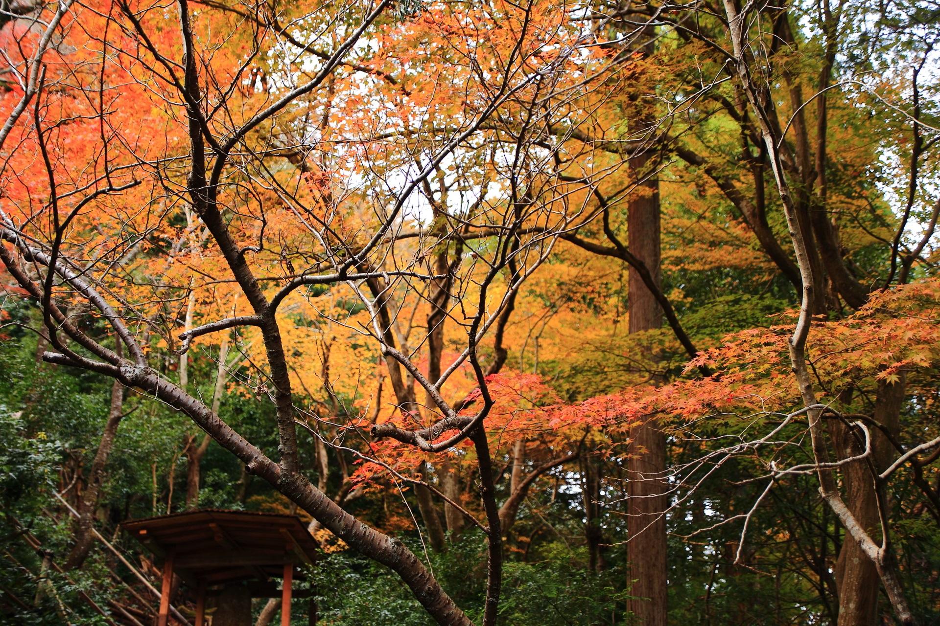 大悲閣千光寺に上がる石段の参道の紅葉