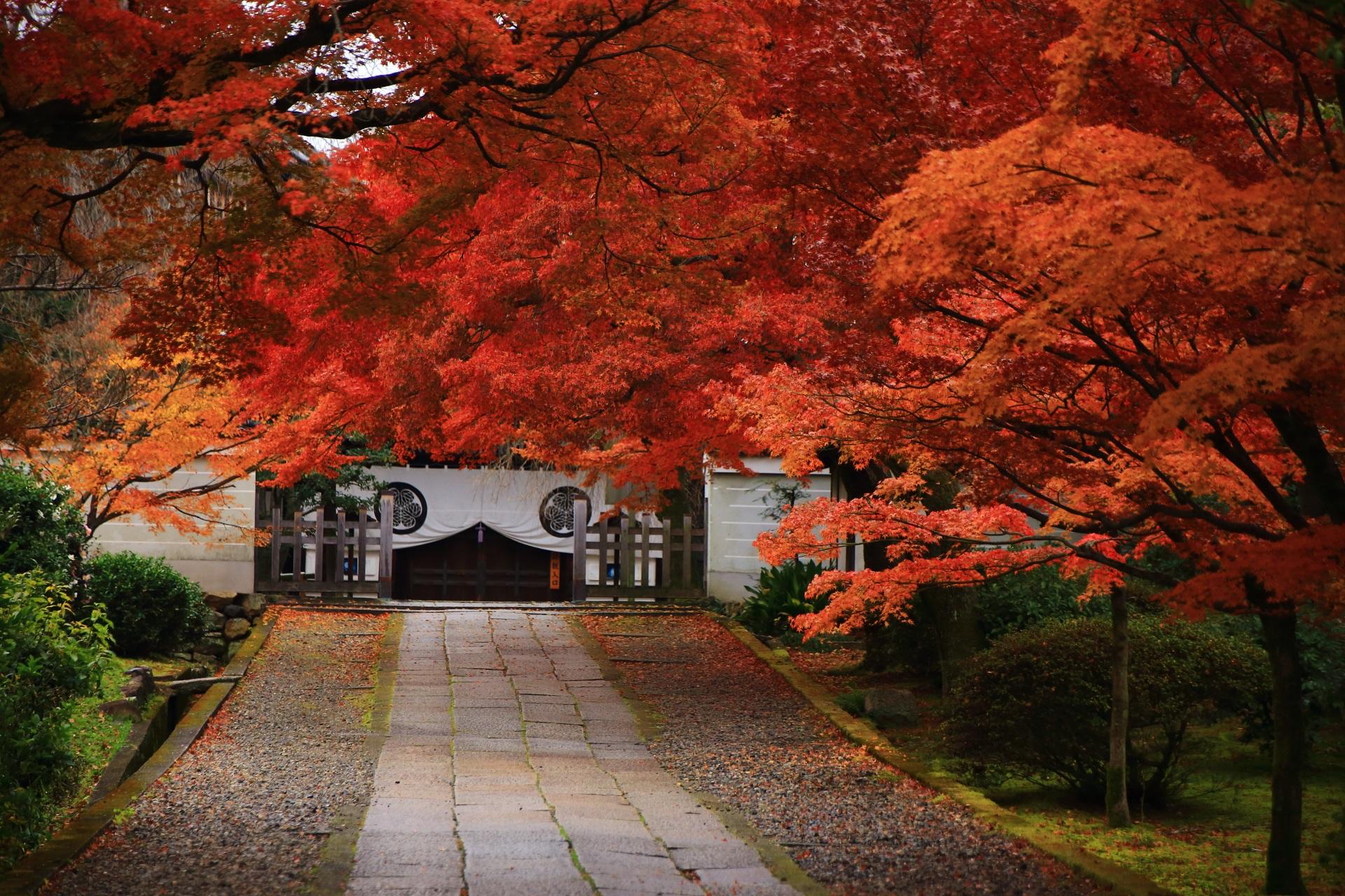 養源院の参道の下の方から眺めた玄関と紅葉