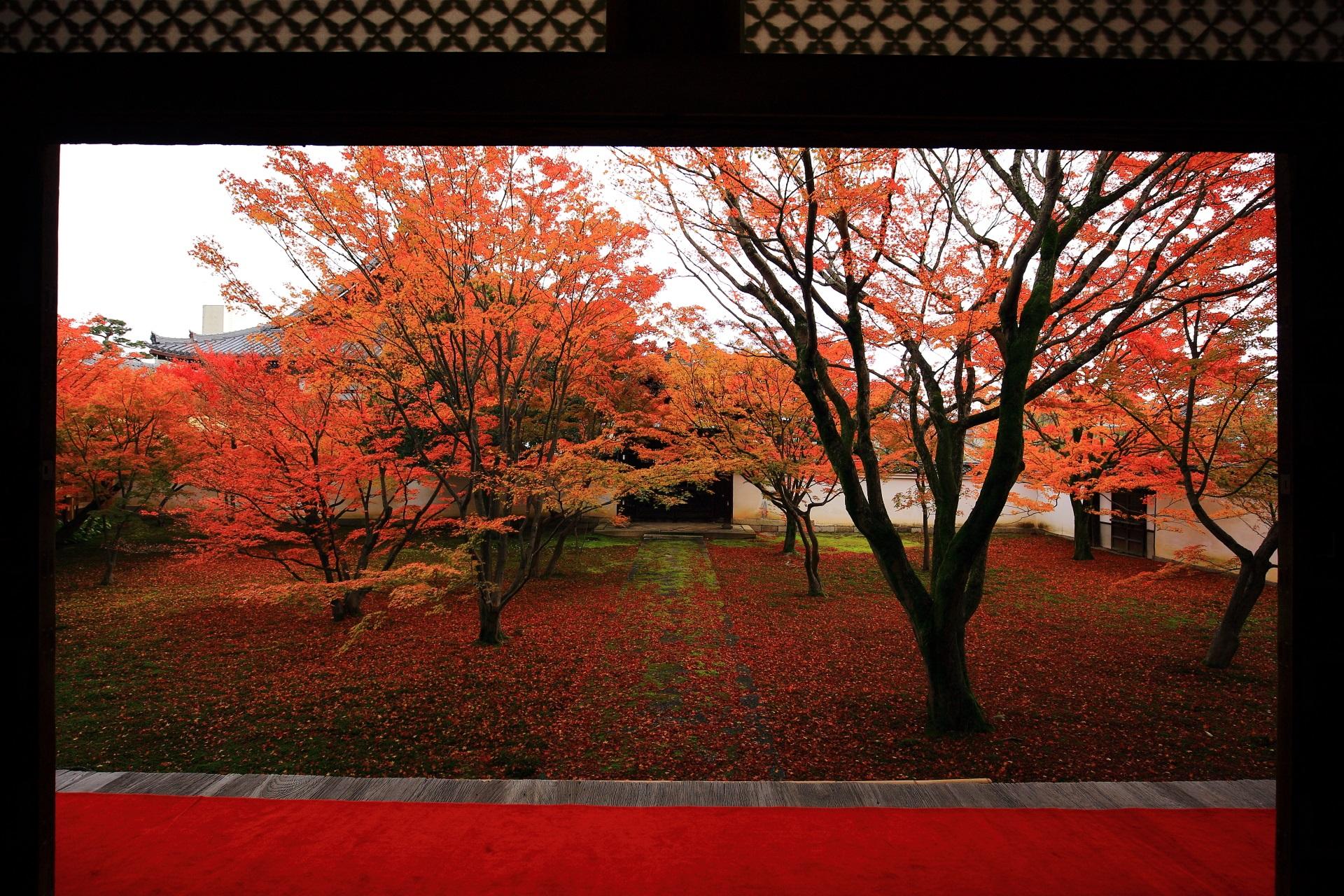 妙覚寺のしっとりとした紅葉につつまれる本堂前庭園