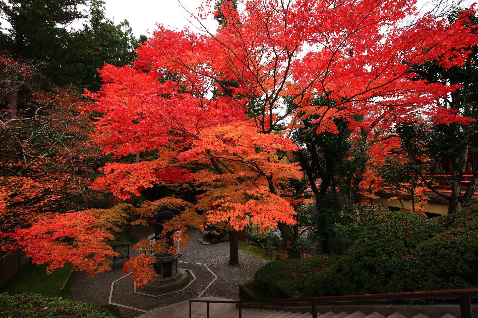 間違いなく一生もんの今熊野観音寺の紅葉