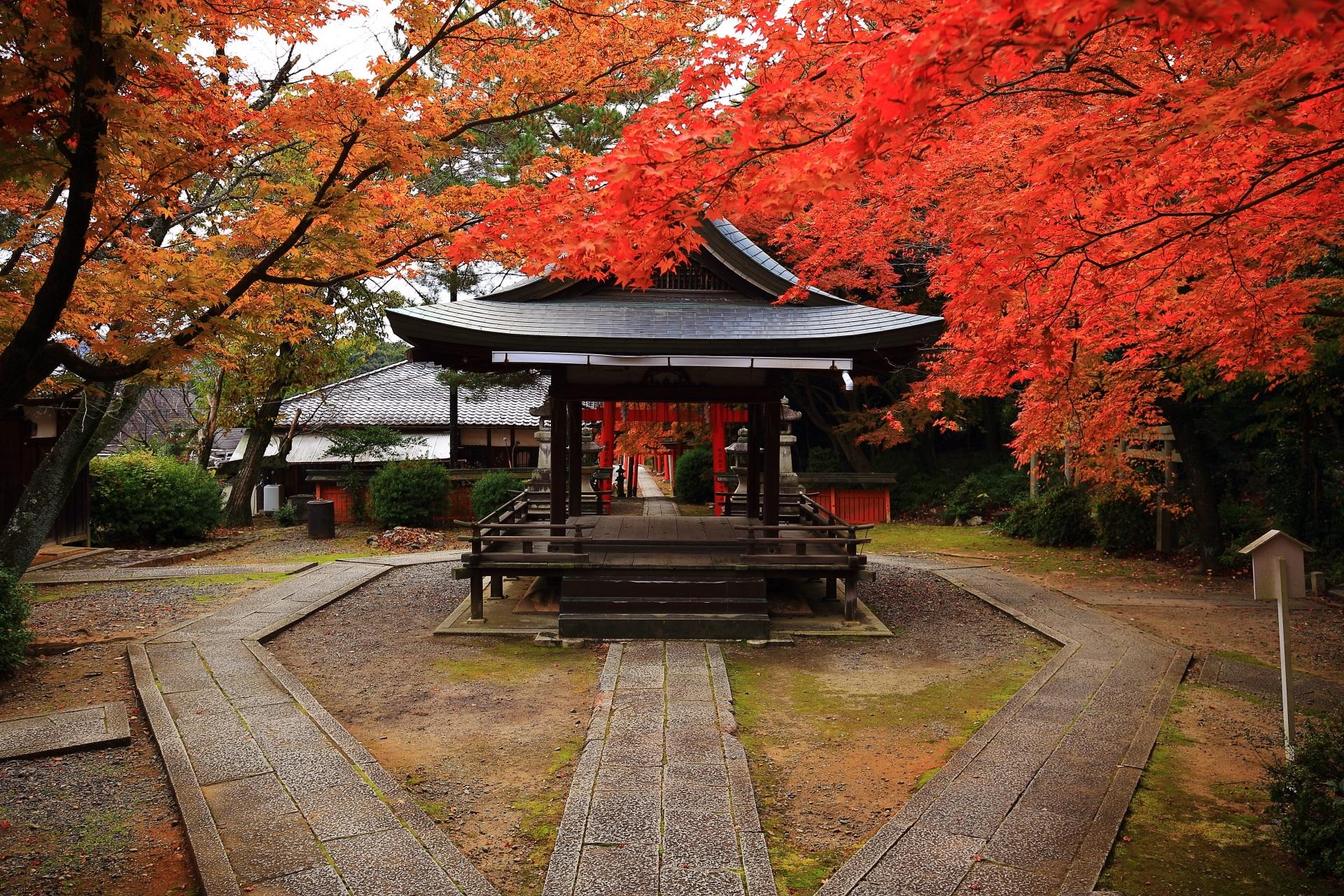 拝殿を彩る降り注ぐような紅葉