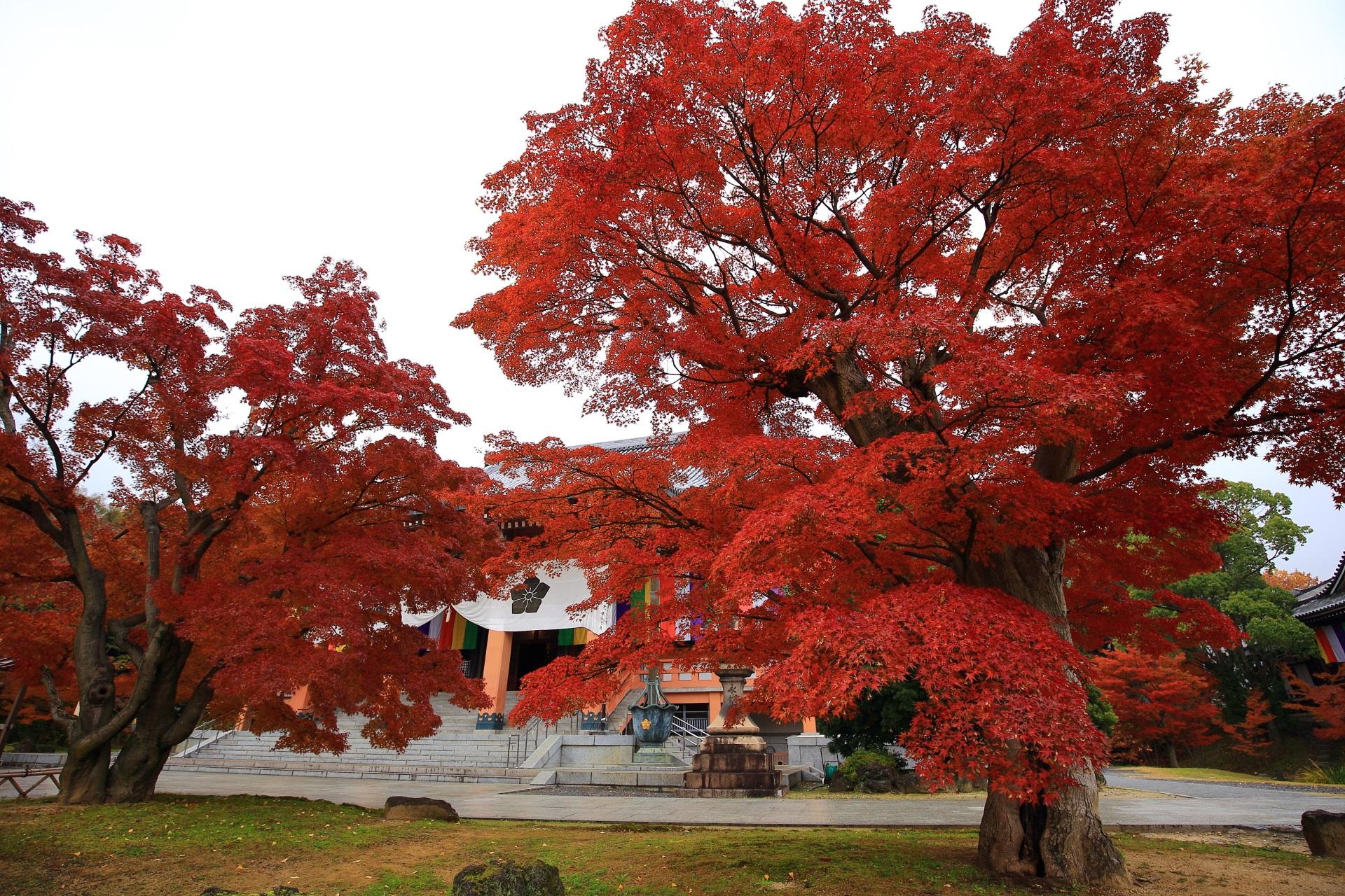 金堂を優雅に染める立派な紅葉