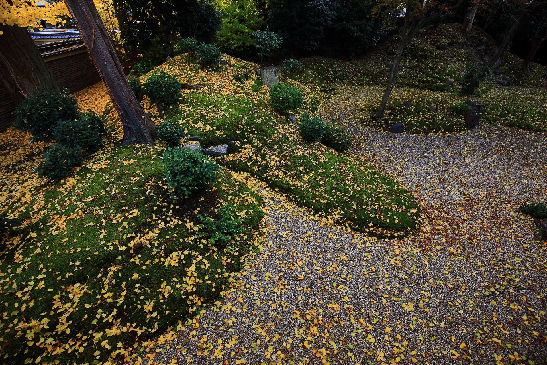 綺麗な緑の苔を染める豪快な散り銀杏