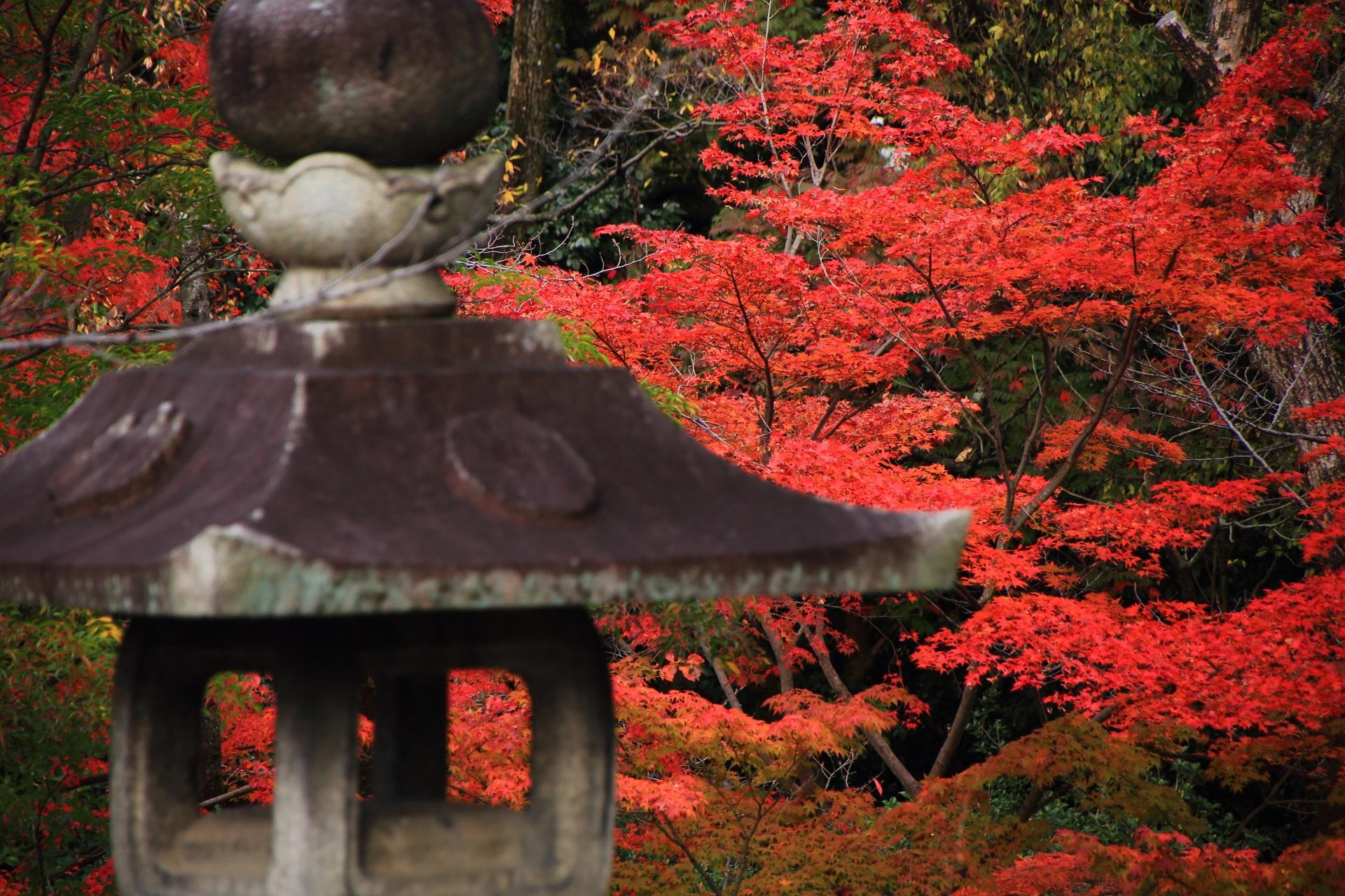 大谷本廟の燈籠と後ろで華やぐ鮮やかな紅葉