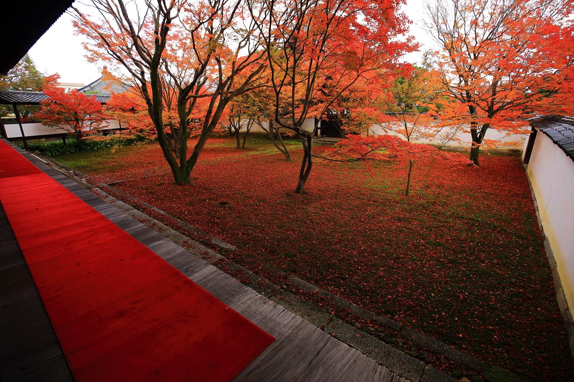 京都西陣の街中にある妙覚寺の絶品の紅葉と散りもみじの庭園