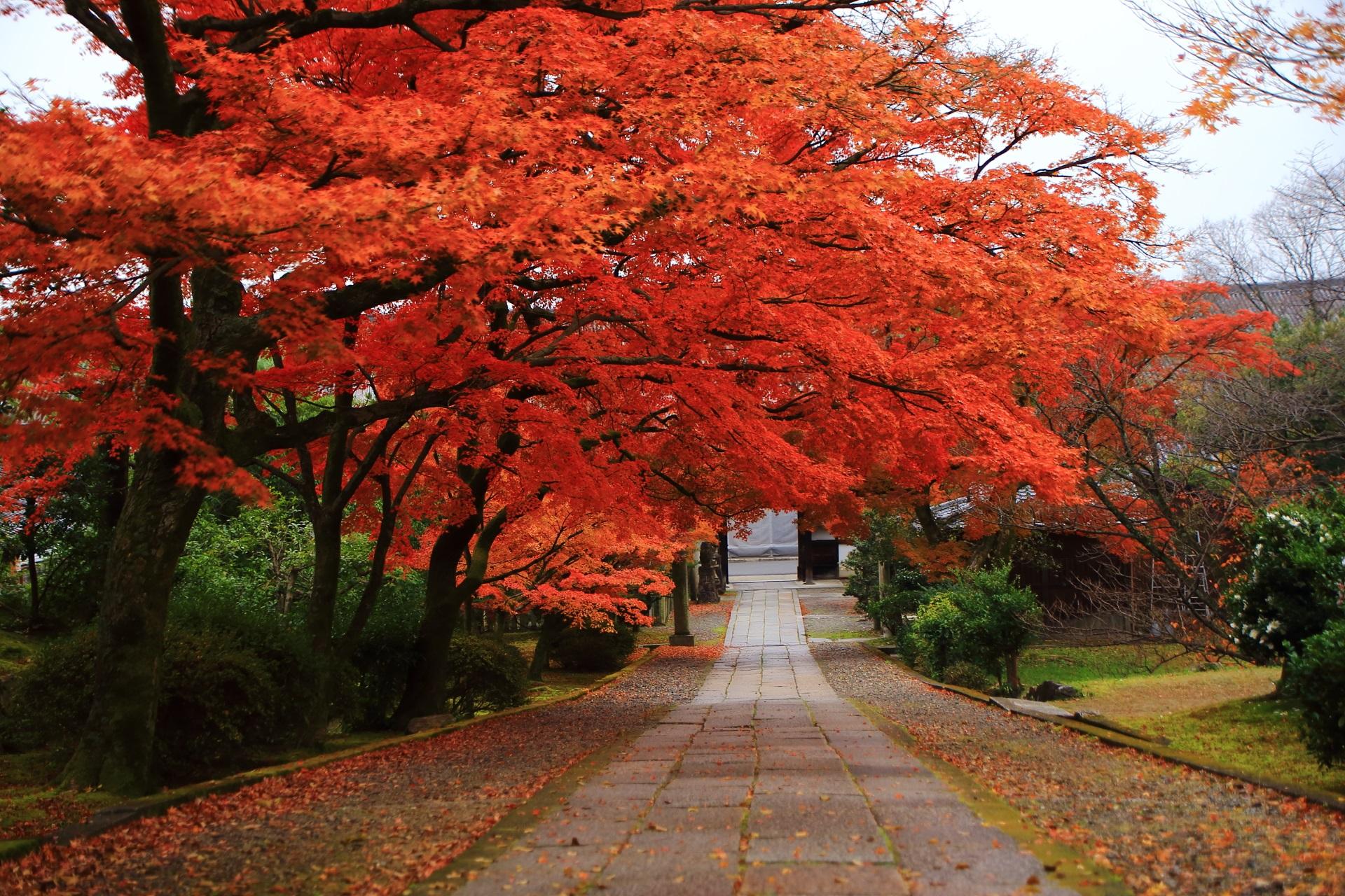 見事な色づきとボリュームの参道を彩る圧巻の紅葉