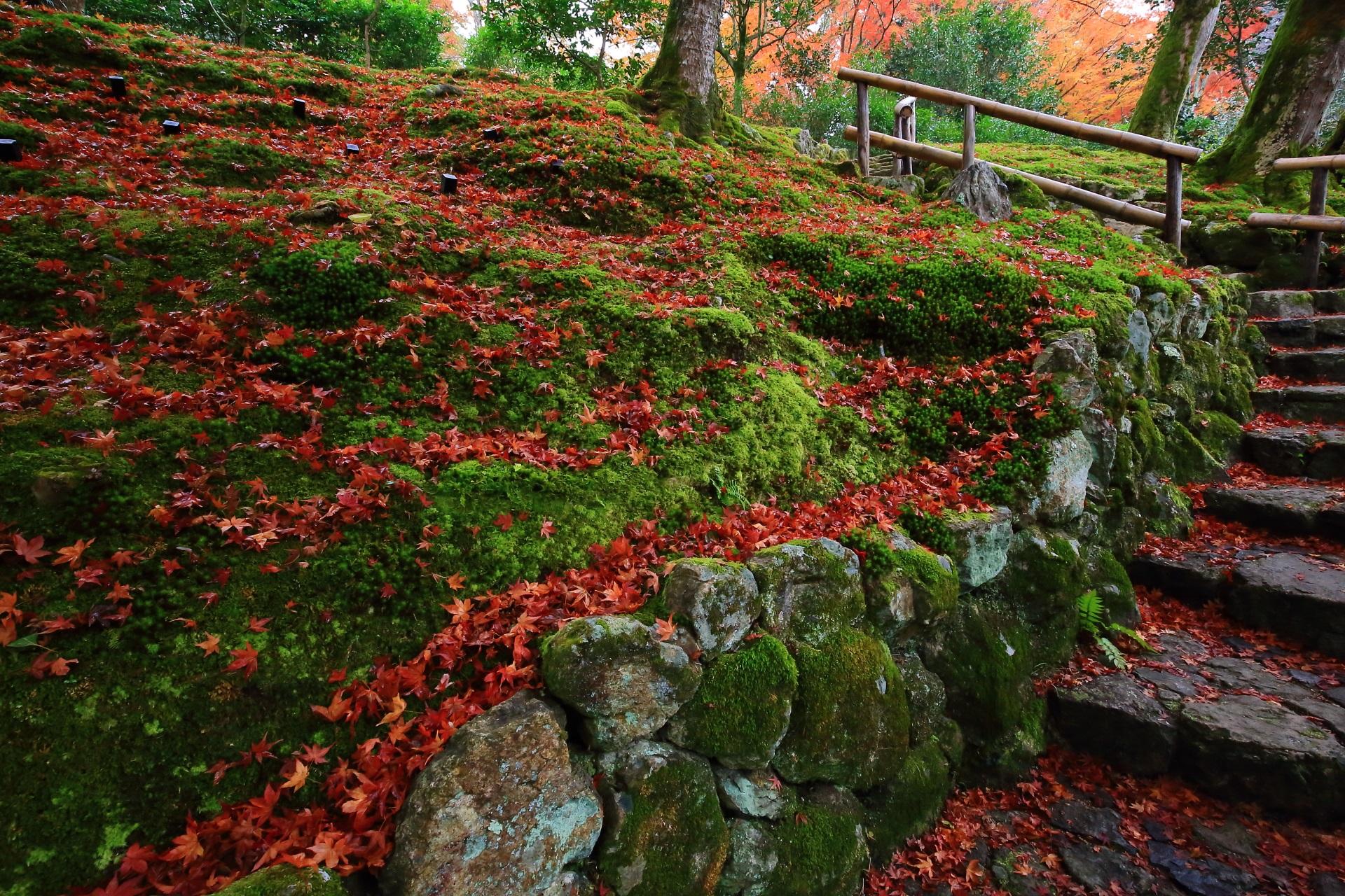 石垣と苔を彩る圧巻の散り紅葉
