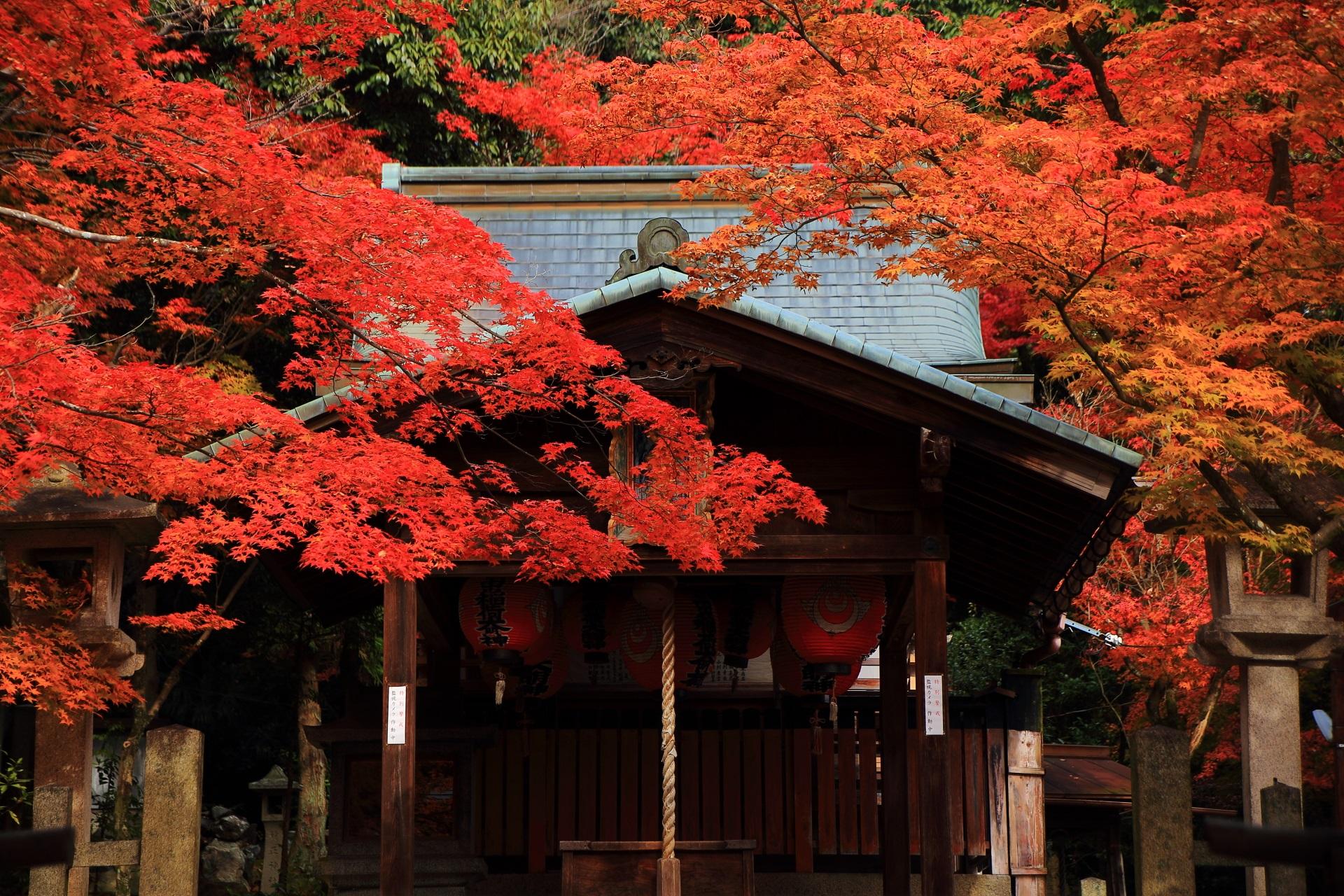 静かに佇む本殿を彩る燃えるような絶品の紅葉
