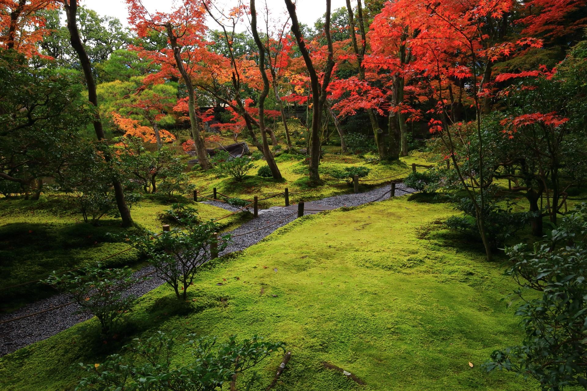 紅葉が彩る無鄰菴の淡い緑の苔の庭園に続く道