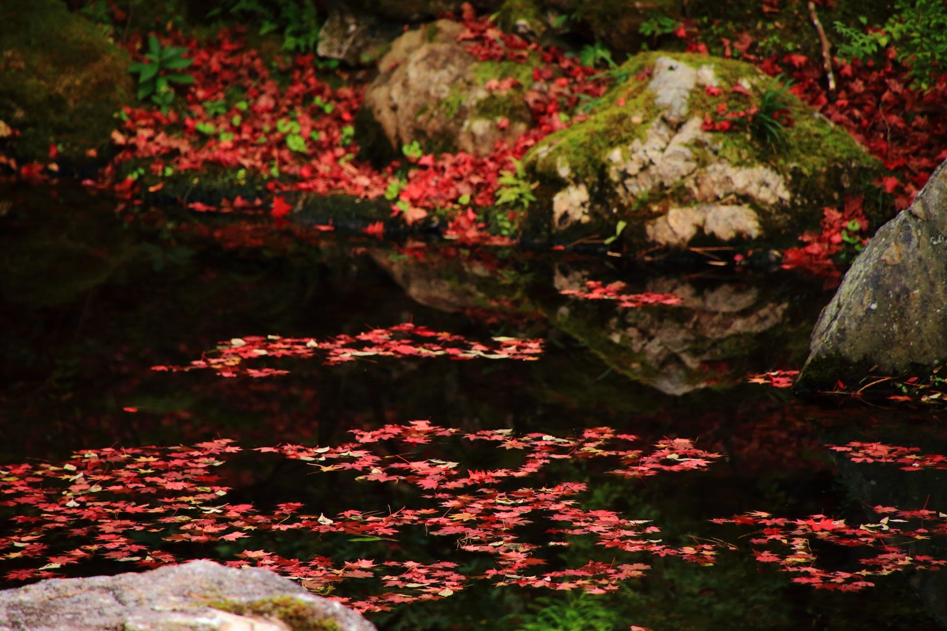 池に浮かぶ華やかな赤い散紅葉