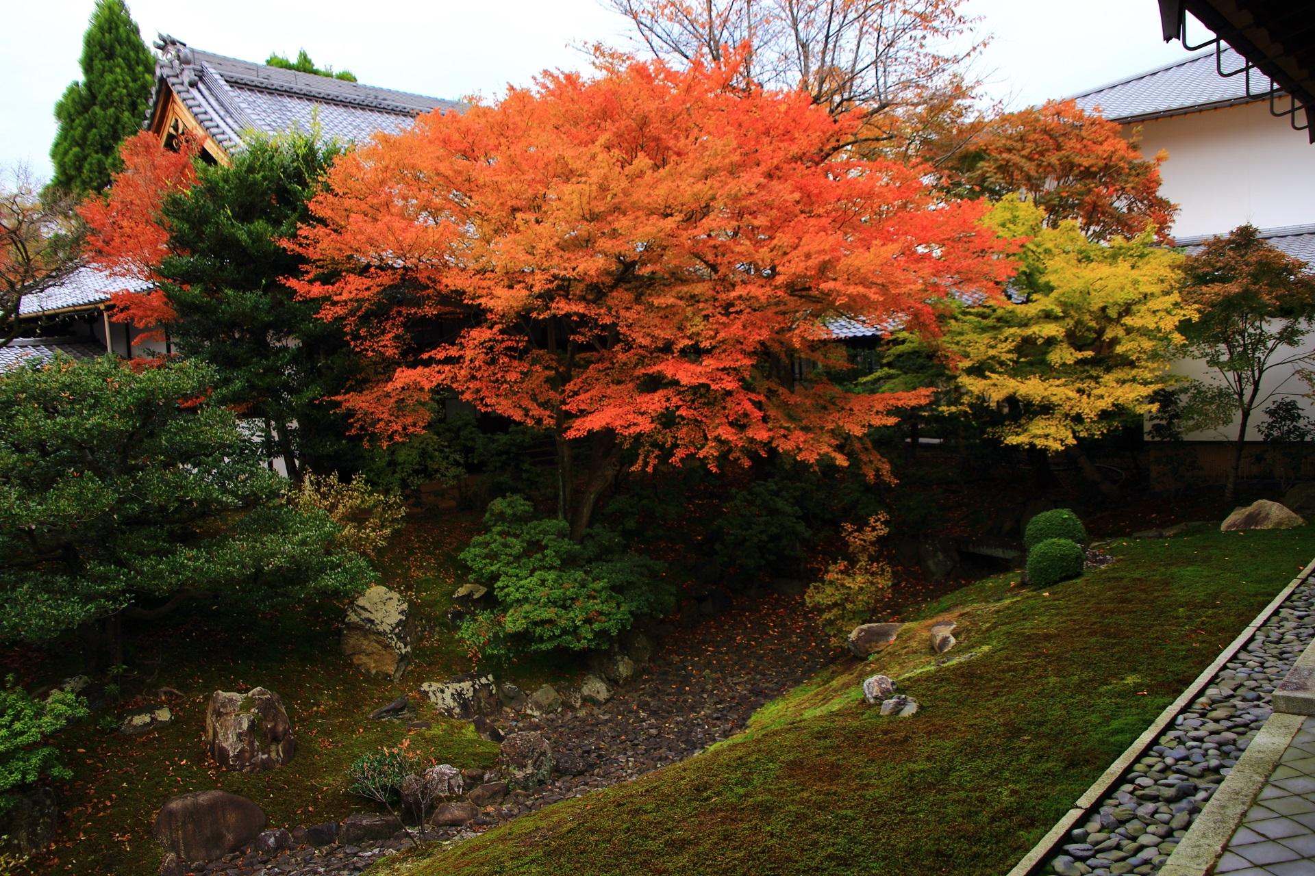 相国寺裏方丈庭園の素晴らしい紅葉と秋の情景