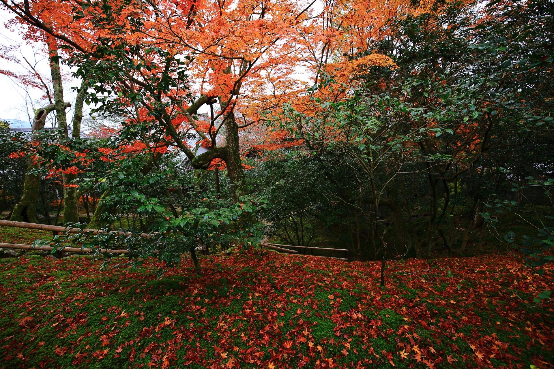 柔らかい苔を鮮やかに染める散り紅葉