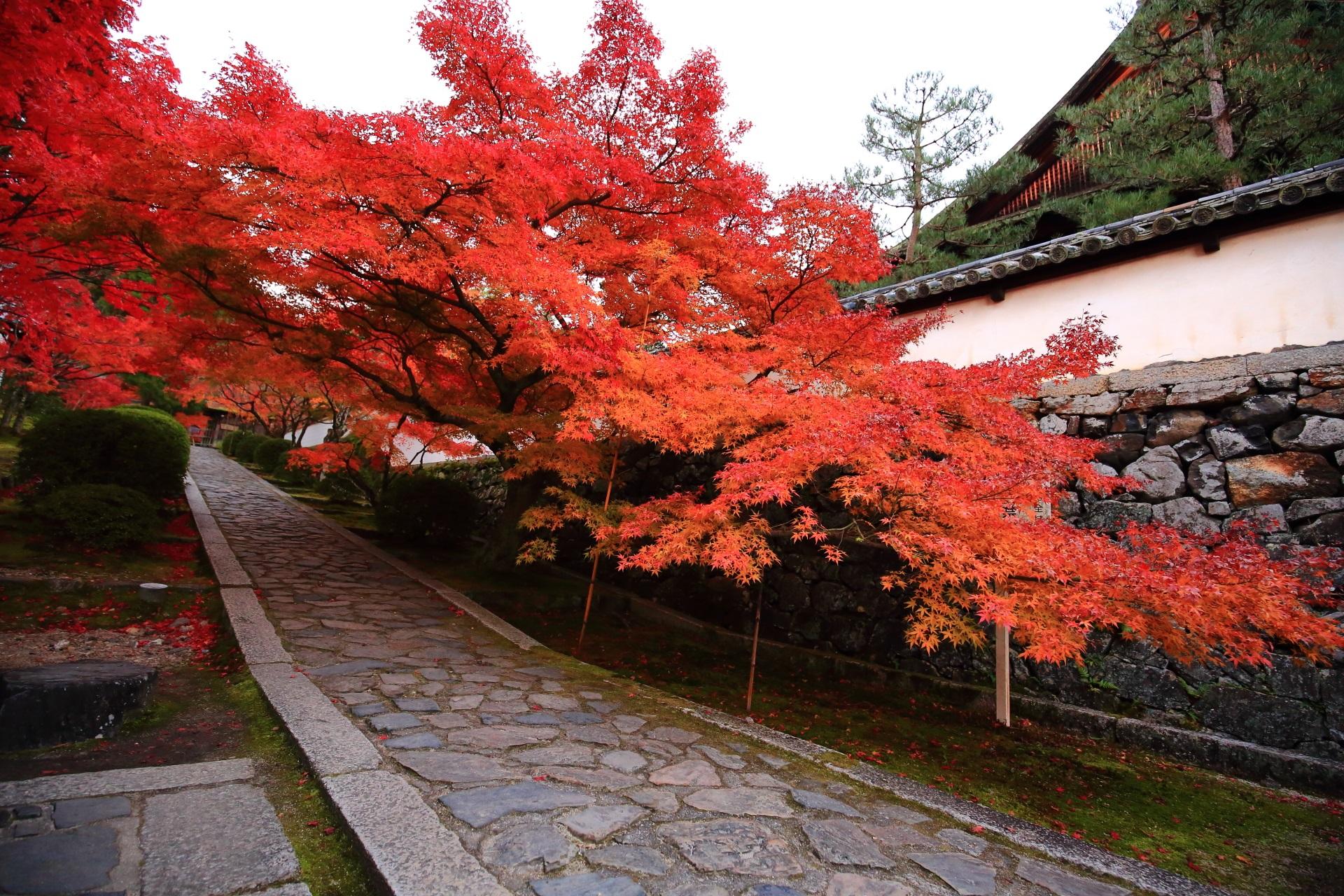 参道を覆う圧巻の紅葉