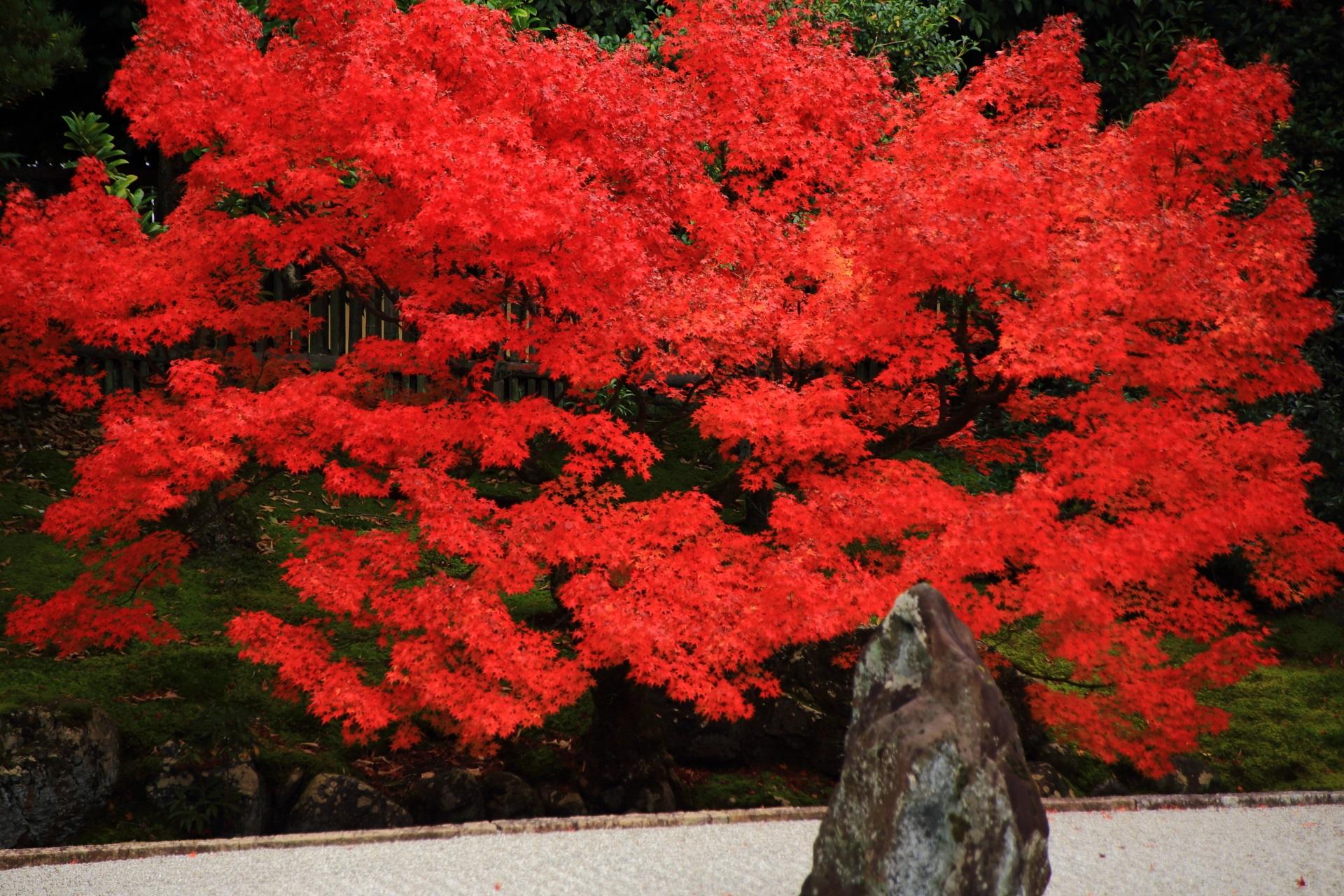岩を豪快に彩る絵になる紅葉