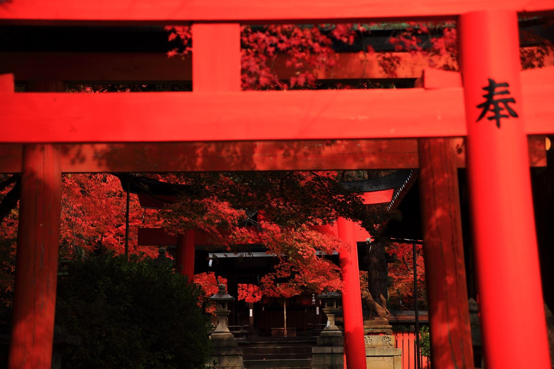 竹中稲荷神社の鳥居の間から溢れる紅葉