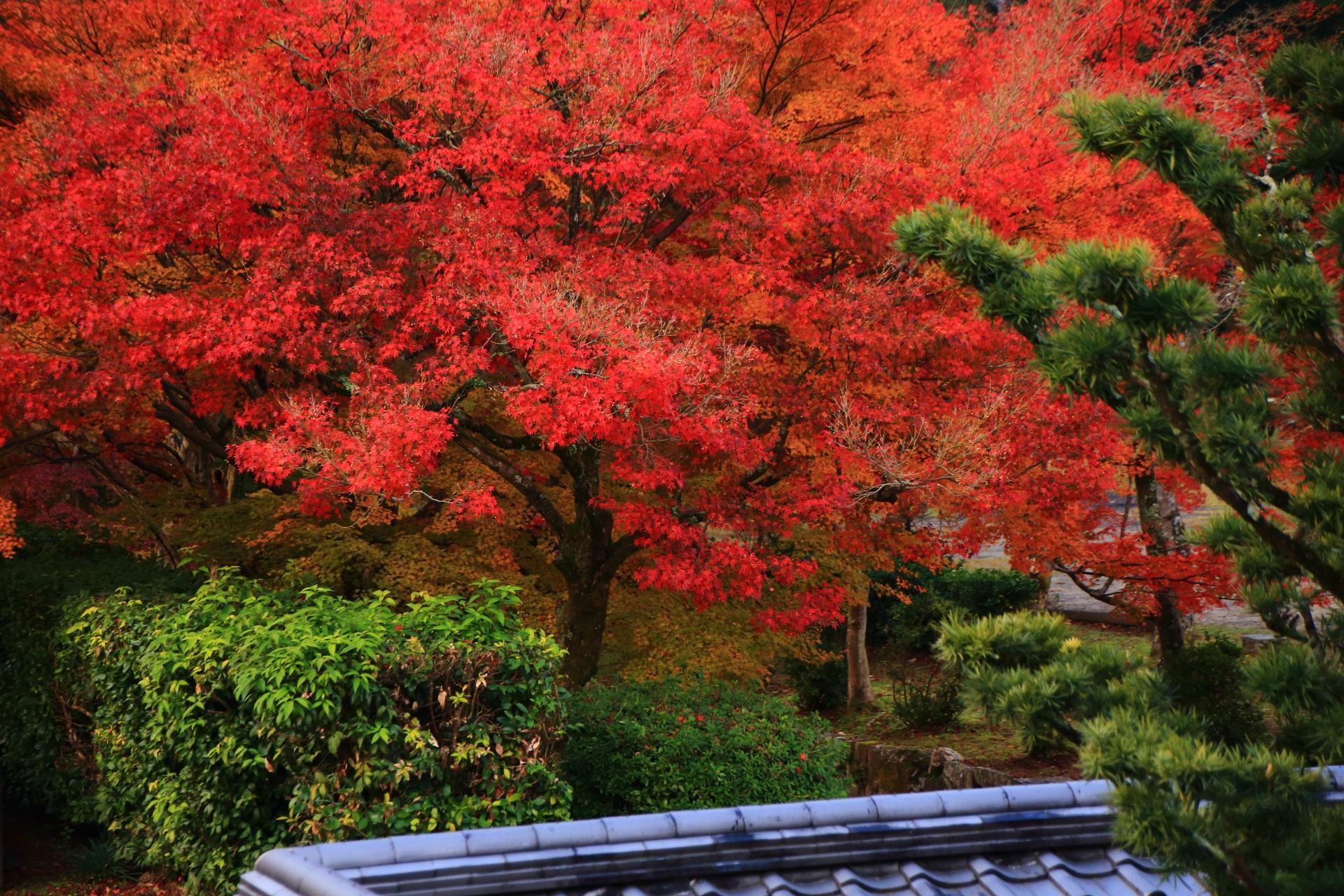 興聖寺の鐘楼付近から眺めた琴坂の真っ赤な紅葉