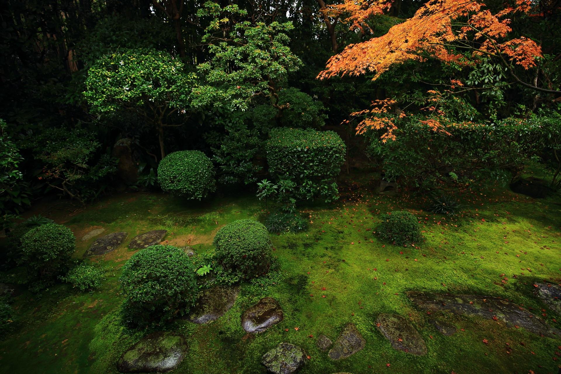 風情ある苔や飛び石の庭園を彩る桂春院の鮮やかな紅葉