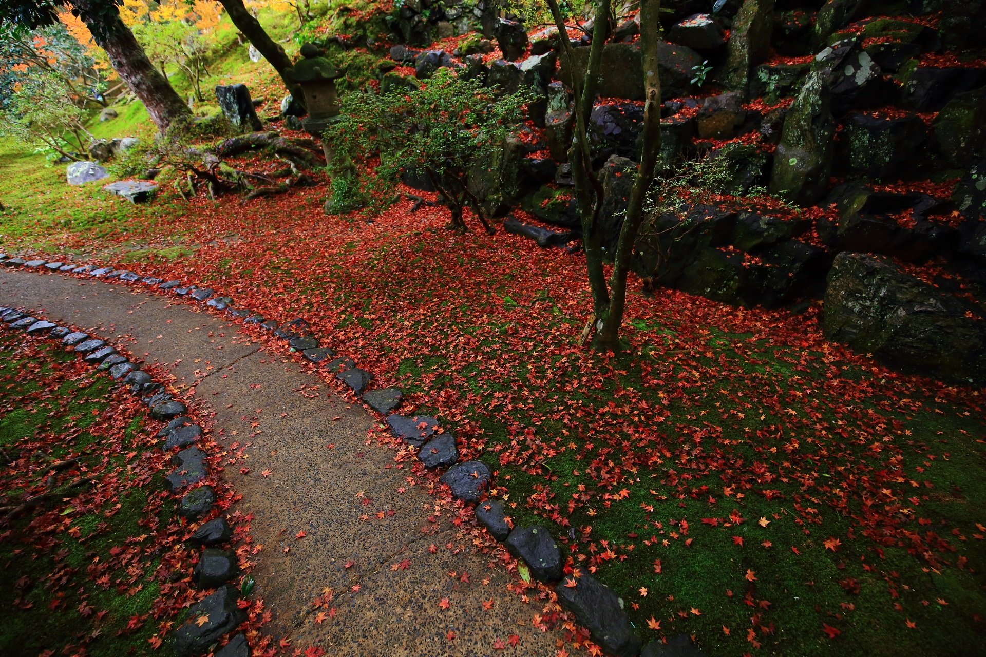 雨で潤った極上の秋色の空間