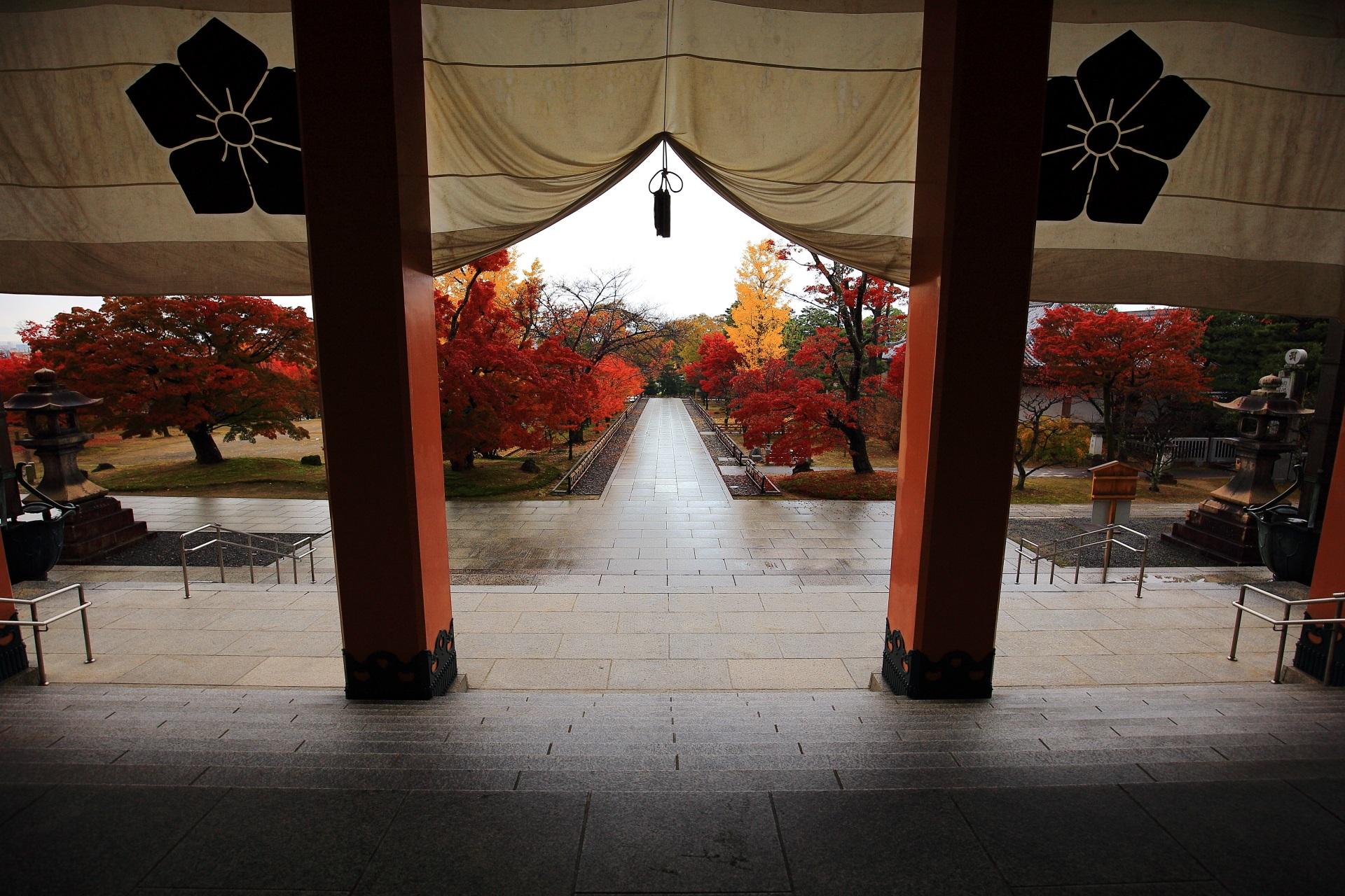 智積院の金堂から眺めた雨で潤った紅葉の参道