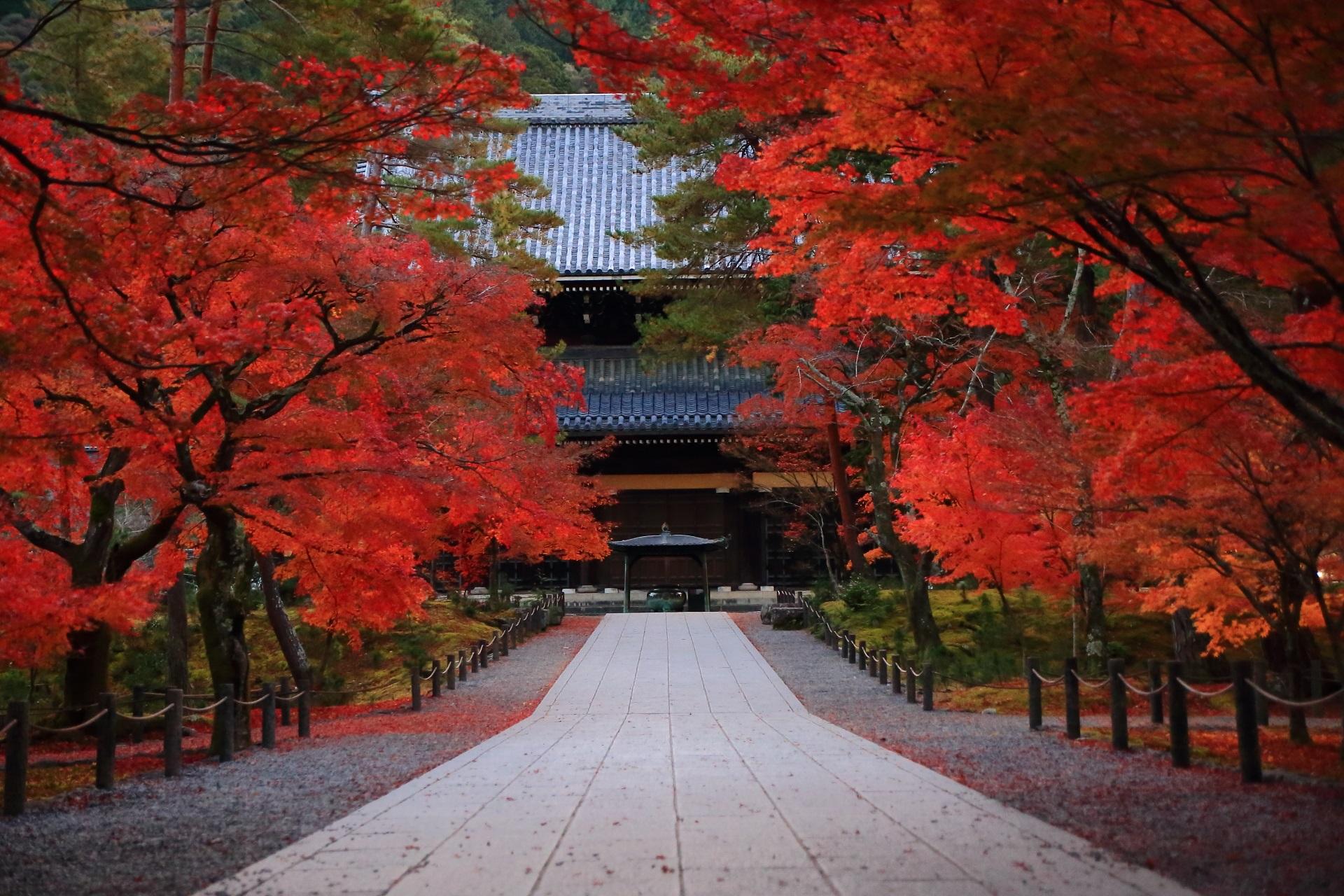 鮮やかな紅葉に彩られる南禅寺の法堂