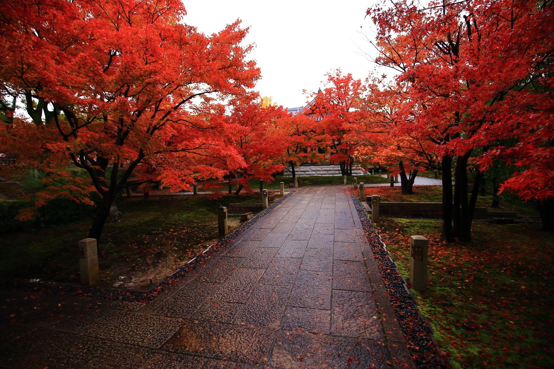雨が美しさを引き立てる智積院の紅葉
