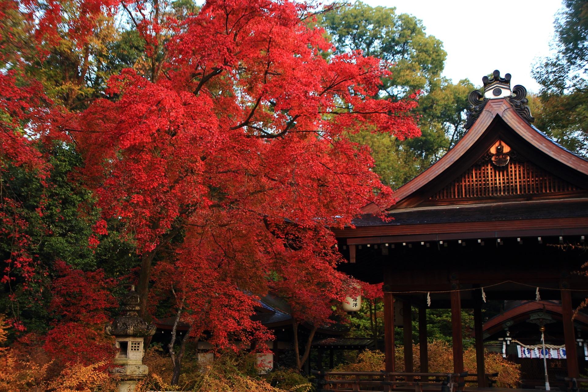 目を引くような鮮烈な色合いの溢れる圧巻の紅葉