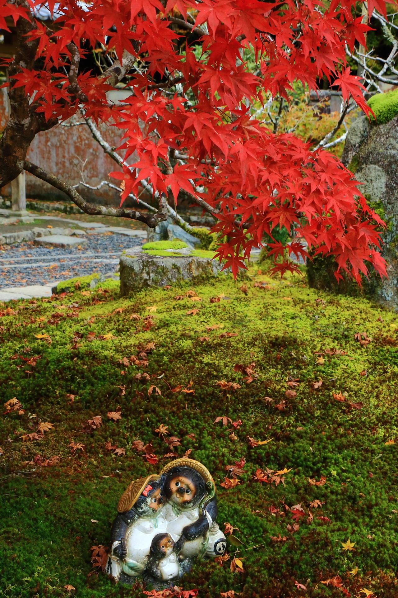 勝院高の本堂前の可愛らしい狸と真っ赤な紅葉