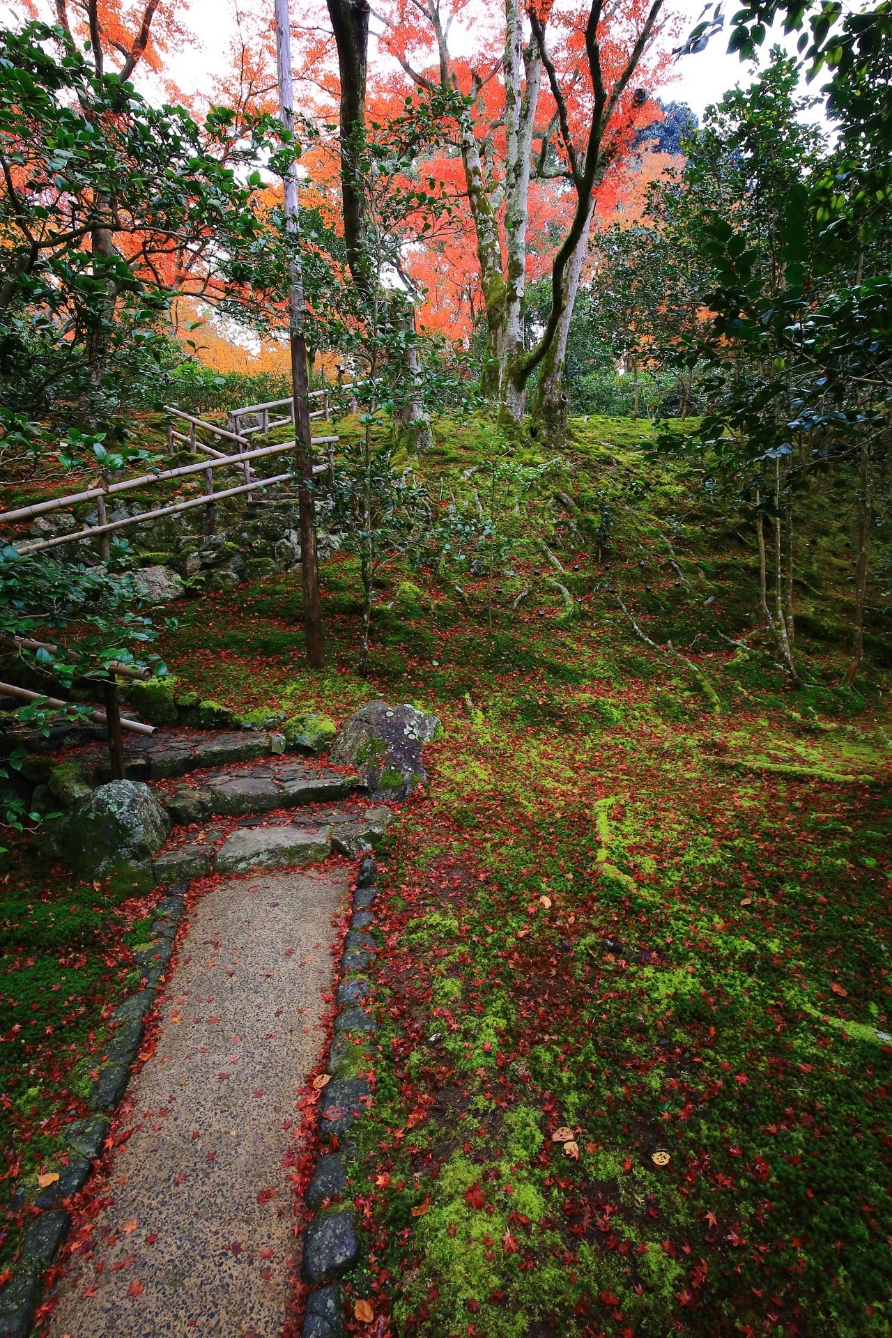 霊鑑寺の素晴らしい散り紅葉と風情ある秋色