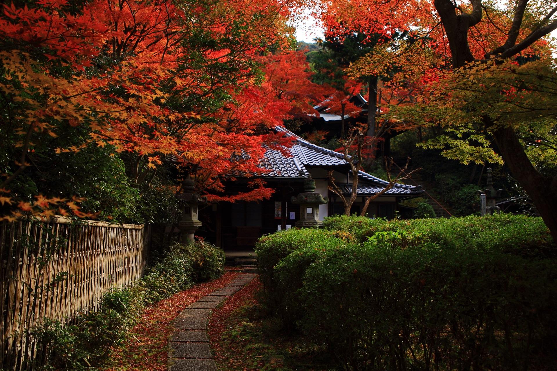来迎院の真っ赤に色づいた紅葉につつまれる本堂と荒神堂