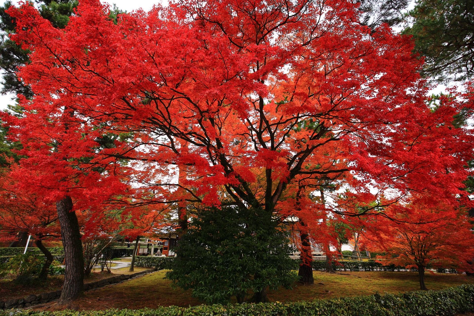 まだまだ見ごろが続く普通に凄い鐘楼付近の紅葉