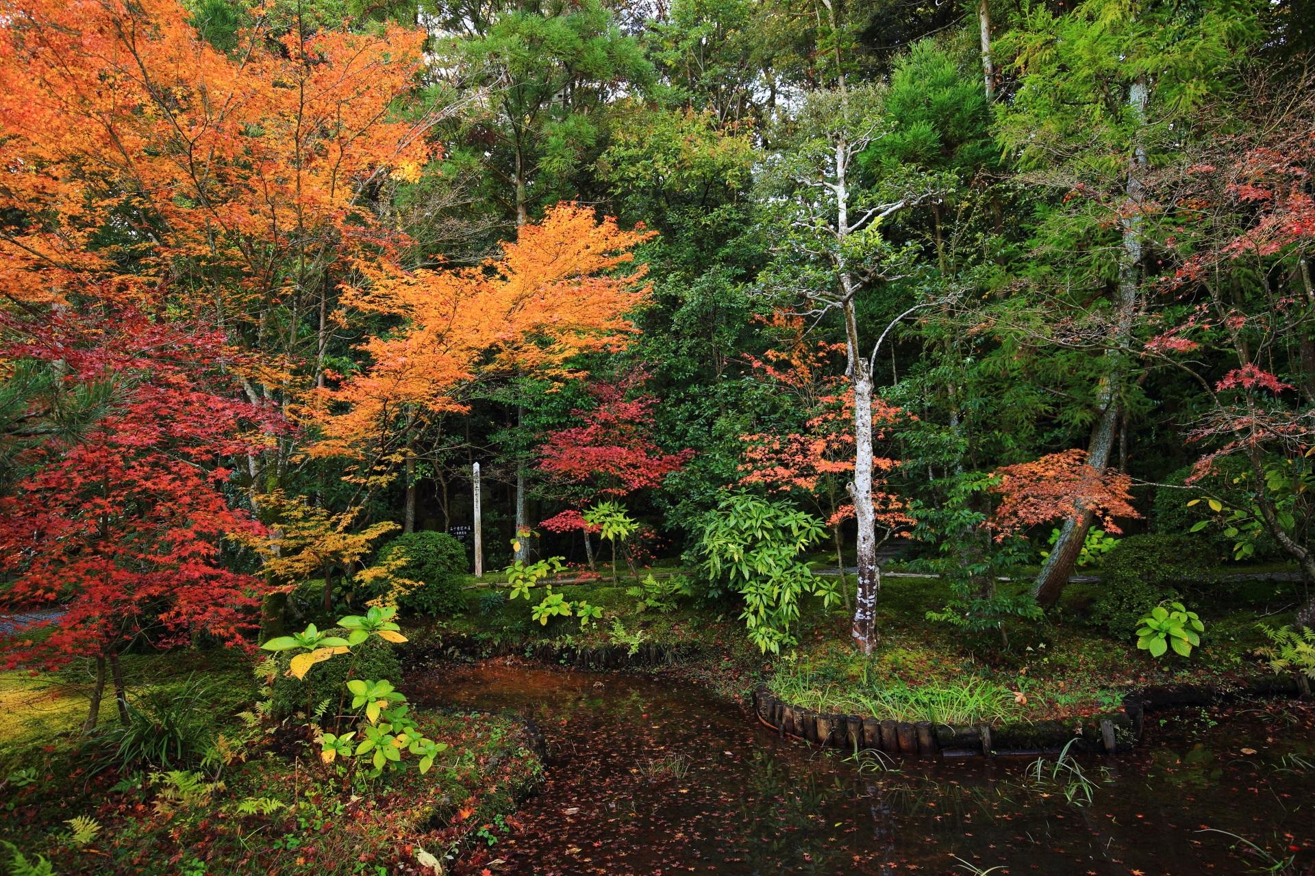 開山堂付近の池の鮮やかな紅葉