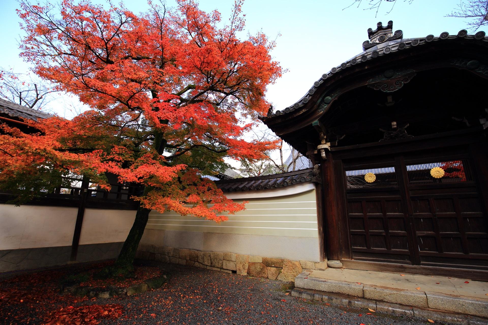 絵になる秋の風景である妙顕寺の勅使門と紅葉