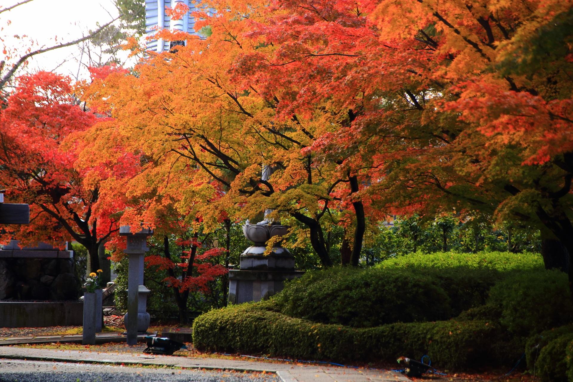 妙顕寺の日に照らされて輝く多彩な紅葉