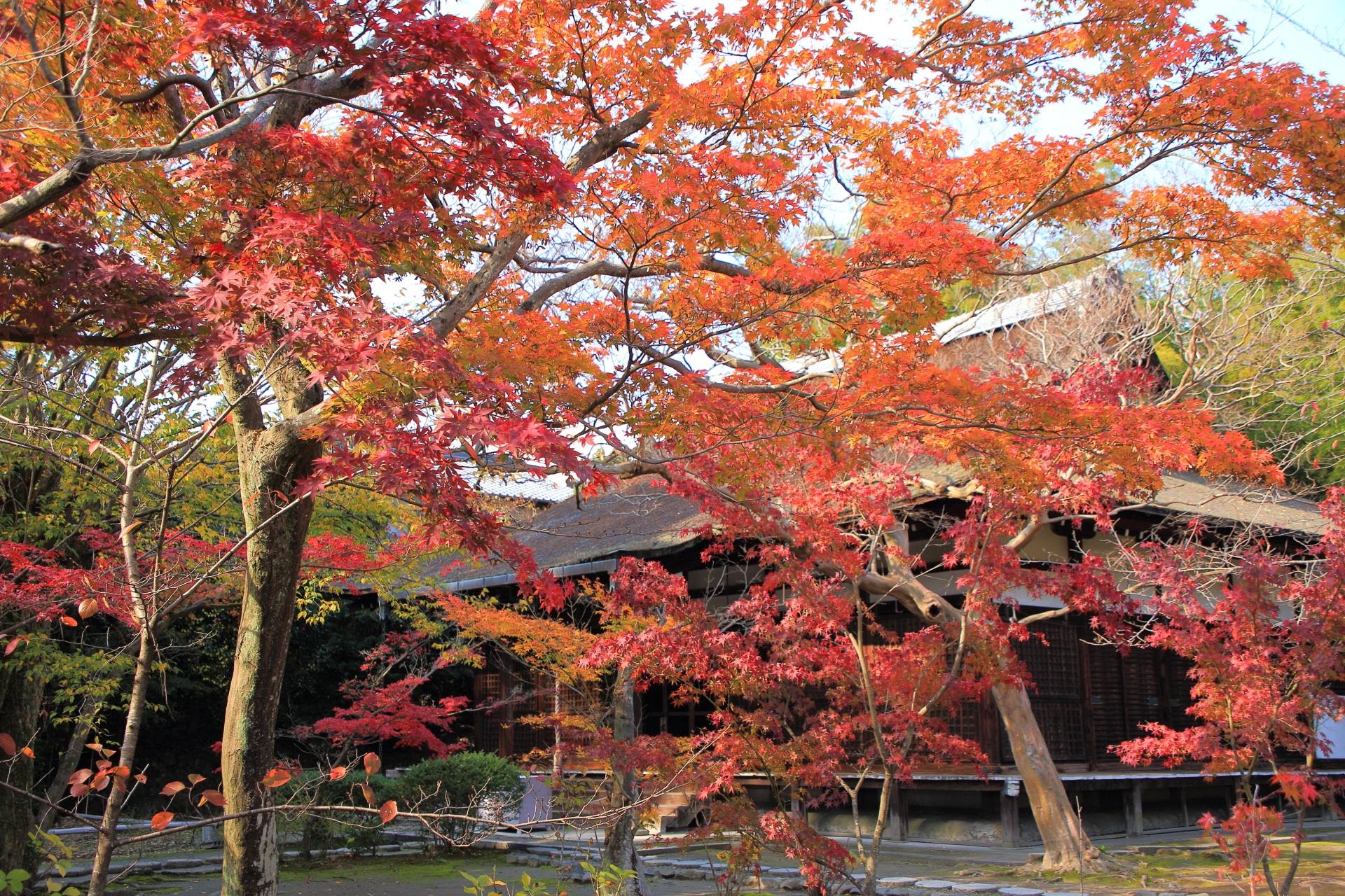 本堂を暖かく秋色に染める紅葉