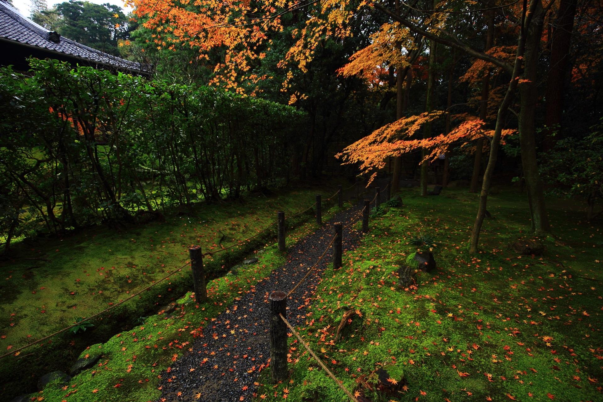 桂春院の真如の庭南側の晩秋の紅葉と散り紅葉