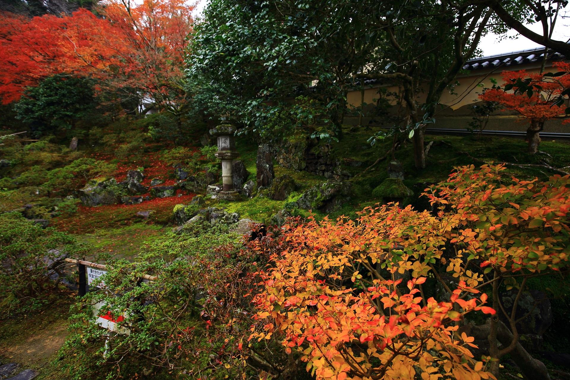 庭園を華やぐ多彩な彩り