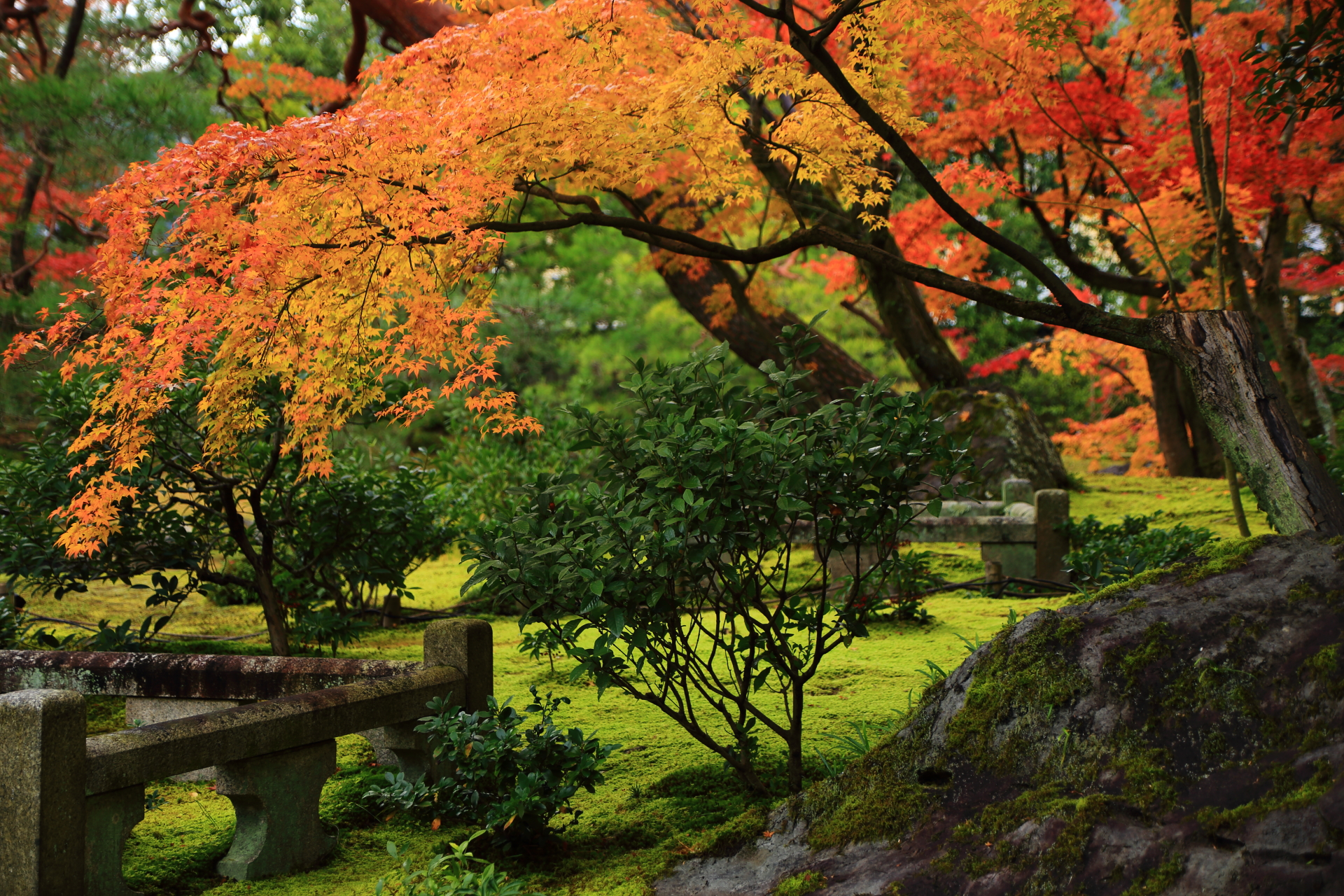 美しいオレンジの紅葉が庭園を彩る無鄰菴