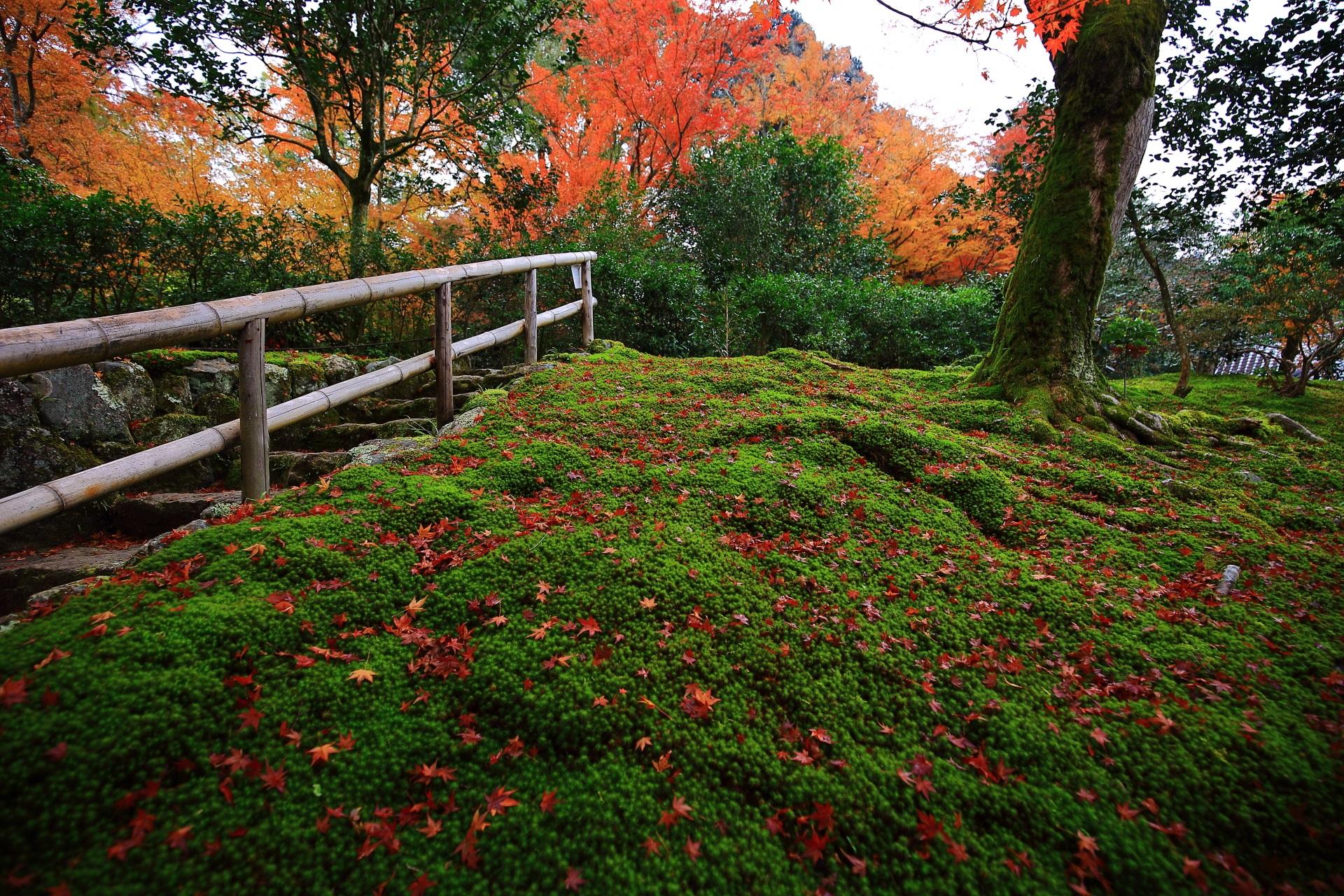 綺麗な苔を上品に染める散り紅葉