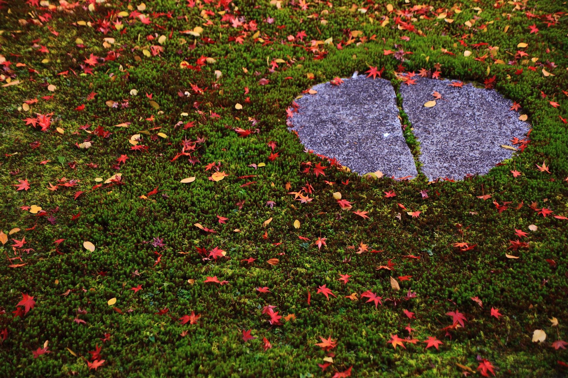 本法寺の控えめで上品な散り紅葉