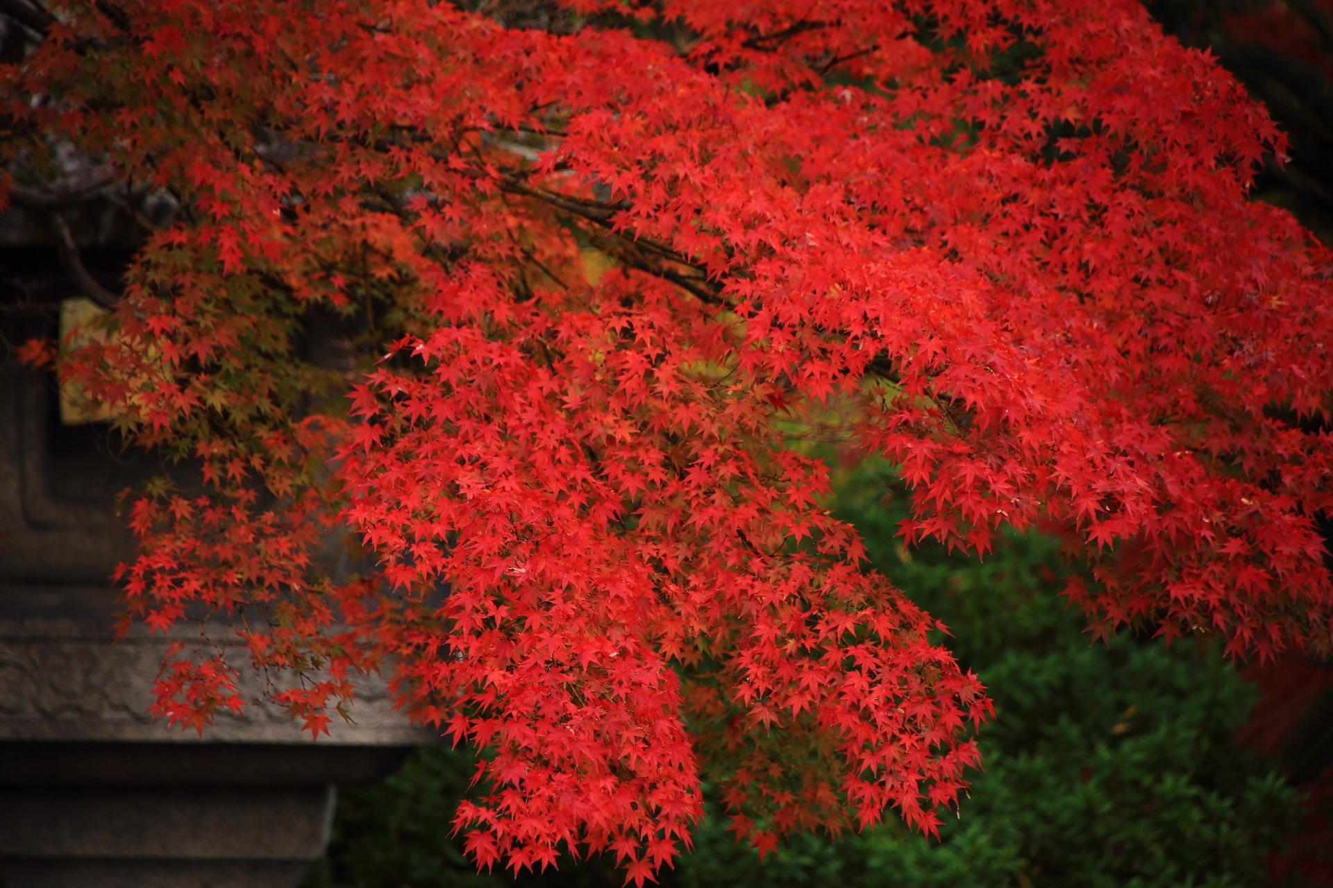 大谷本廟の美しい葉が溢れんばかりの見事な紅葉と燈籠