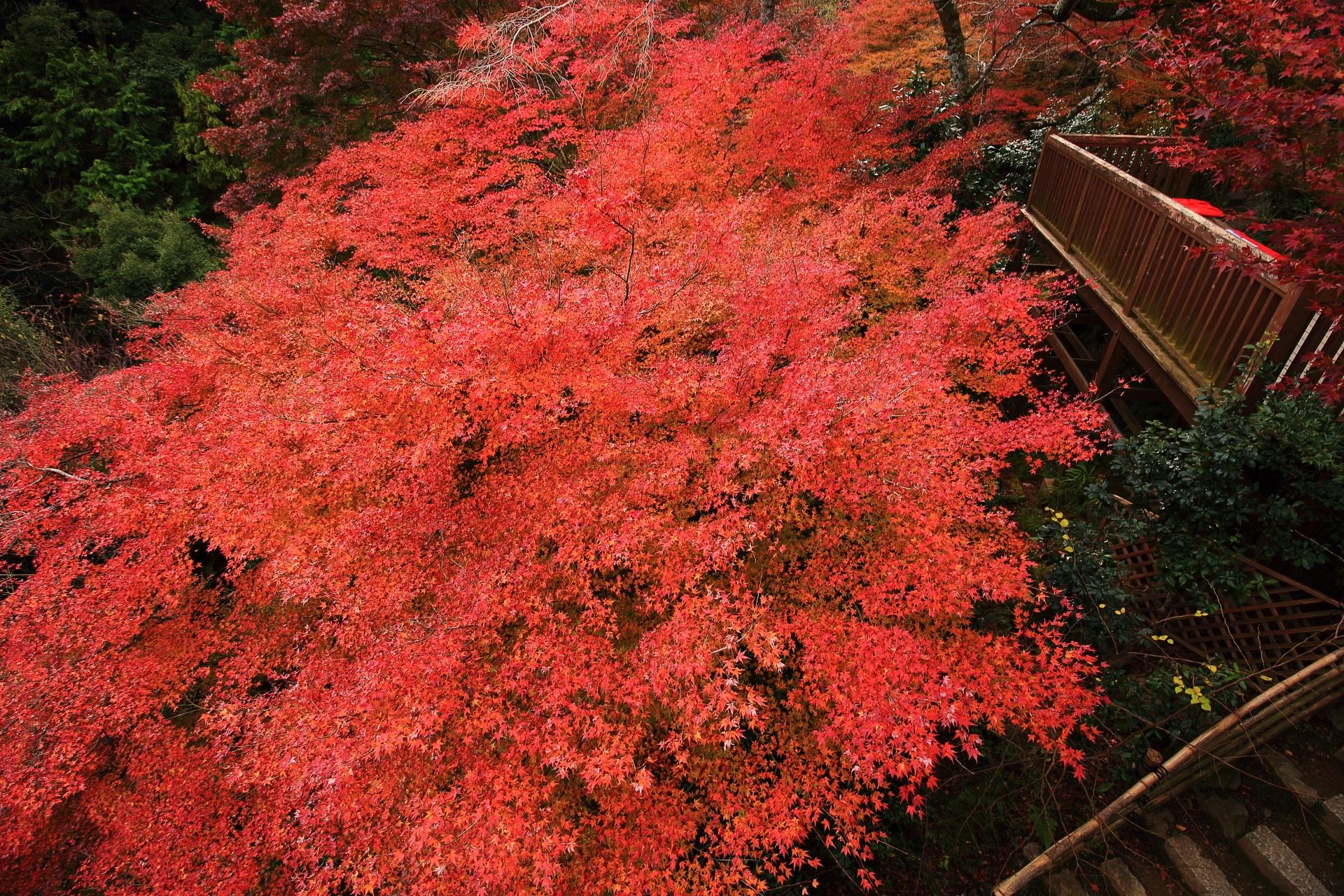大悲閣千光寺の客殿から眺める茶所前の赤い絨毯のように広がる紅葉