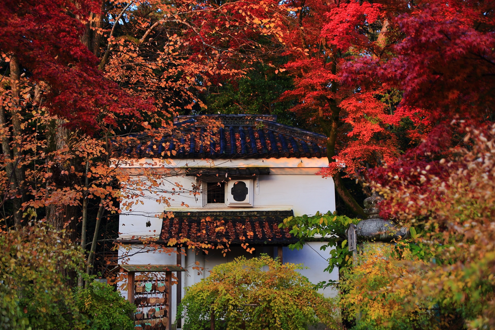 梨木神社の御神木の「愛の木」と呼ばれる桂の木の紅葉