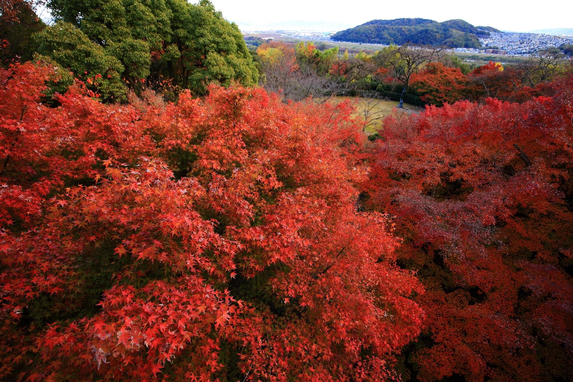 大山崎山荘美術館の素晴らしい紅葉と秋の情景