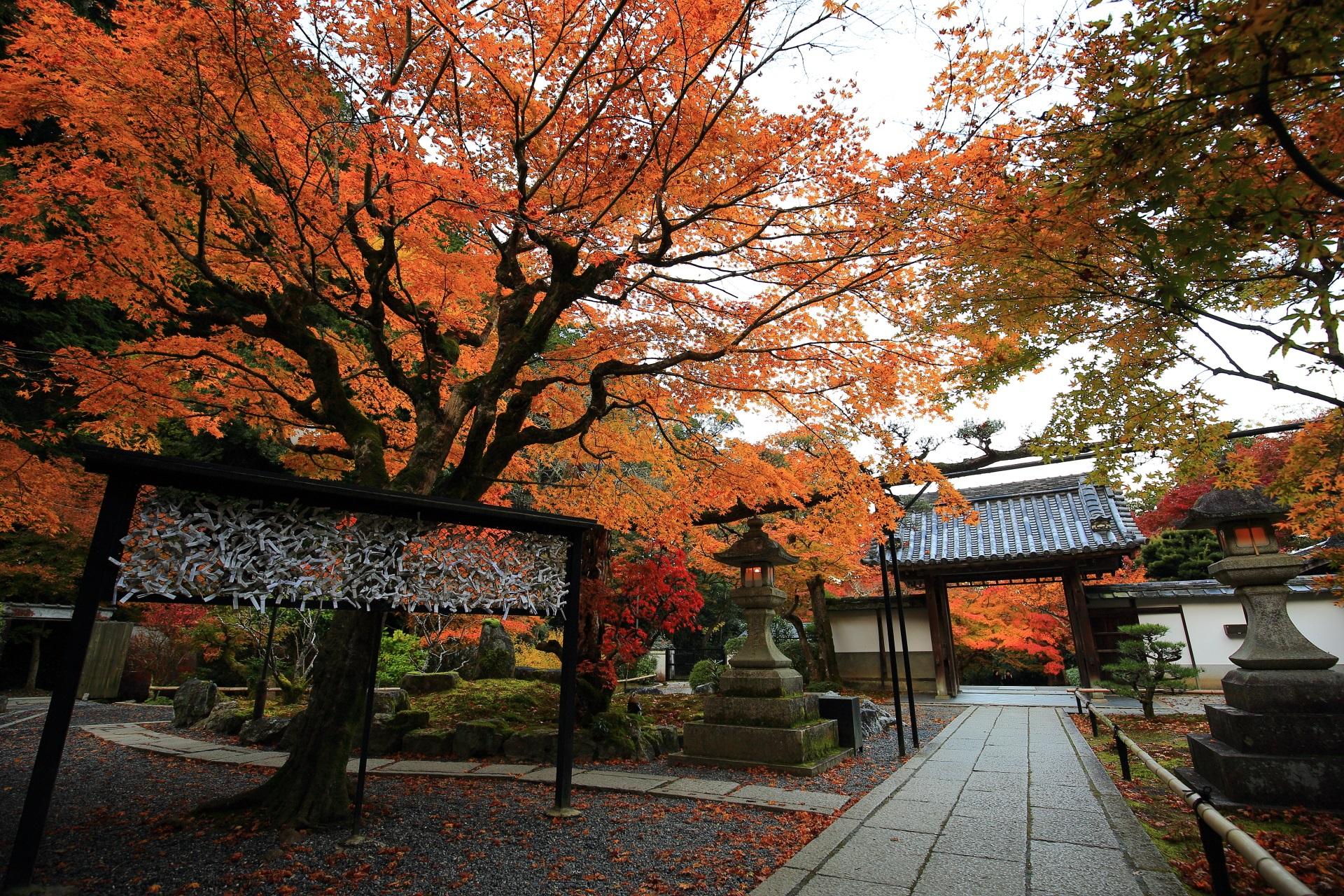 最勝院の本堂前から眺めた山門と紅葉
