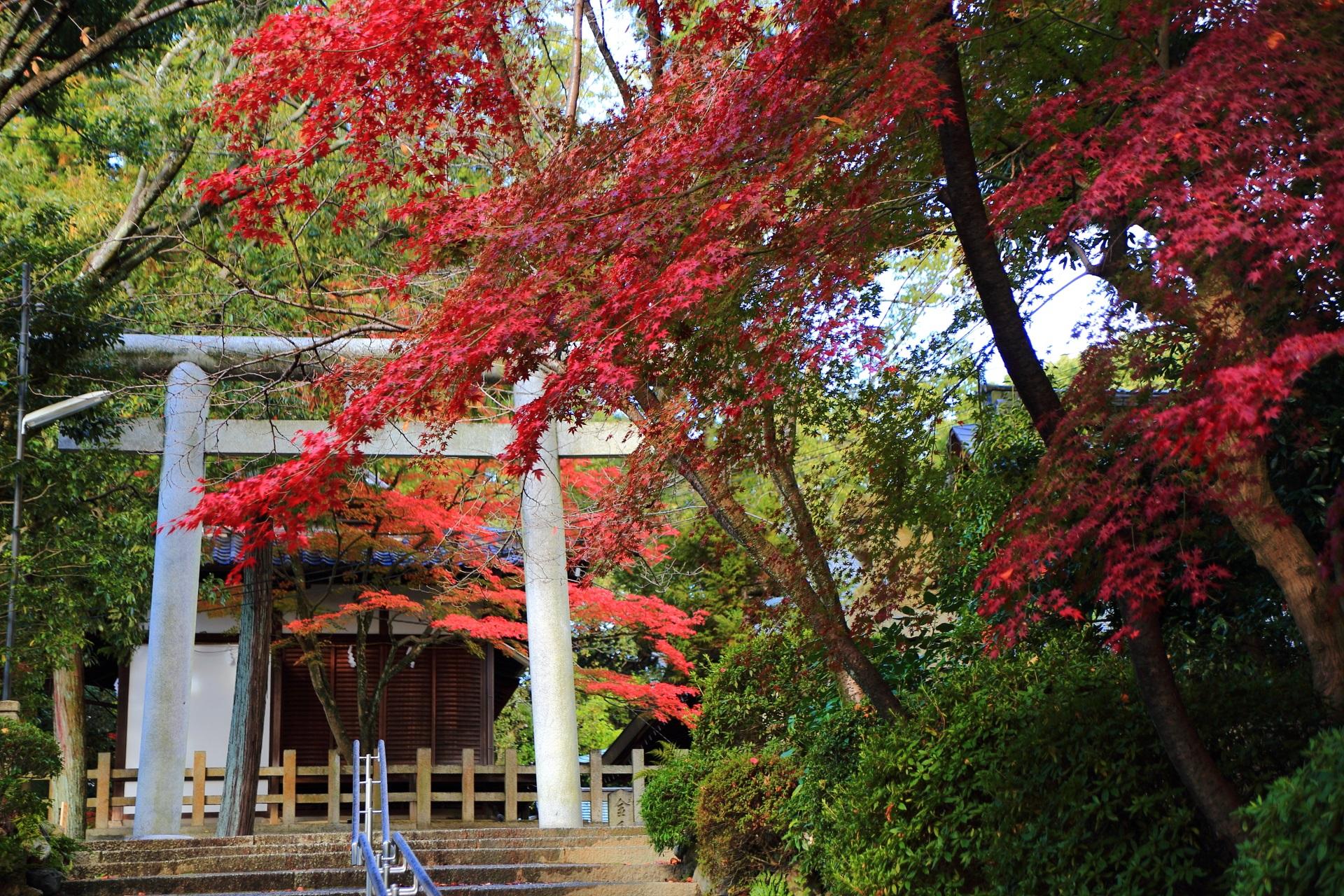 石段上の鳥居と紅葉